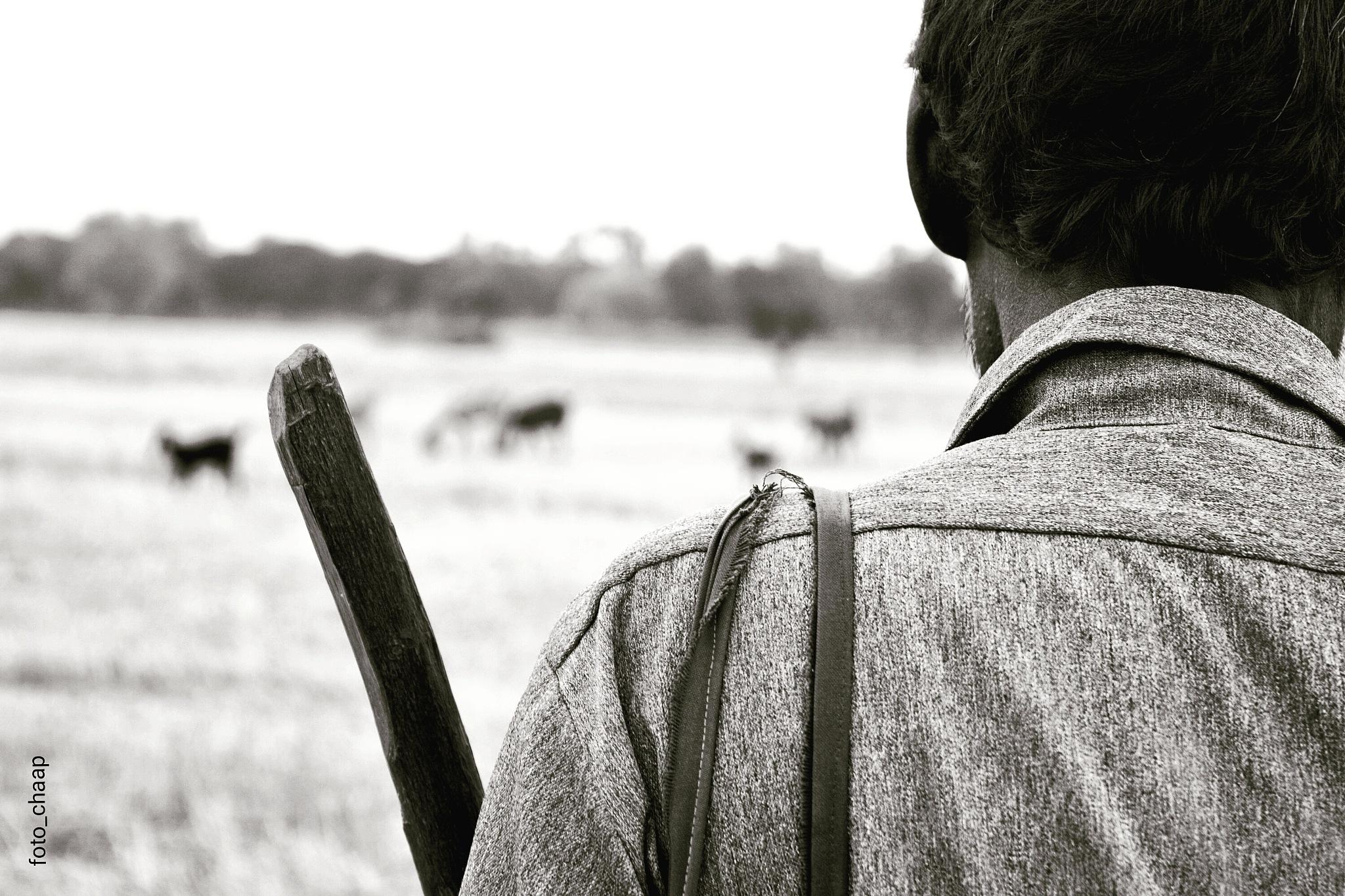 The Shepherd 02 by Jaspal Singh