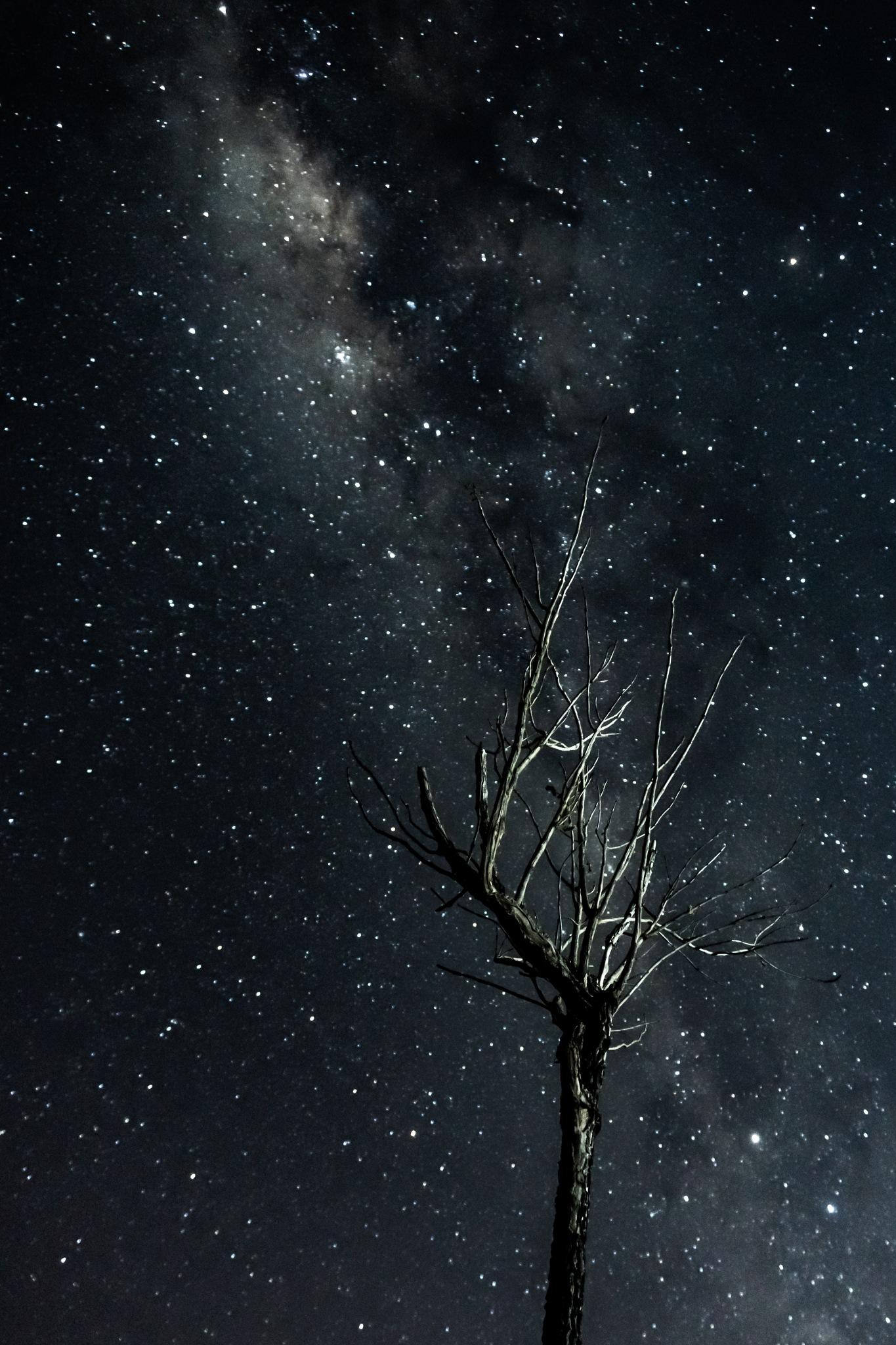 Nightsky by Giordano Rossi