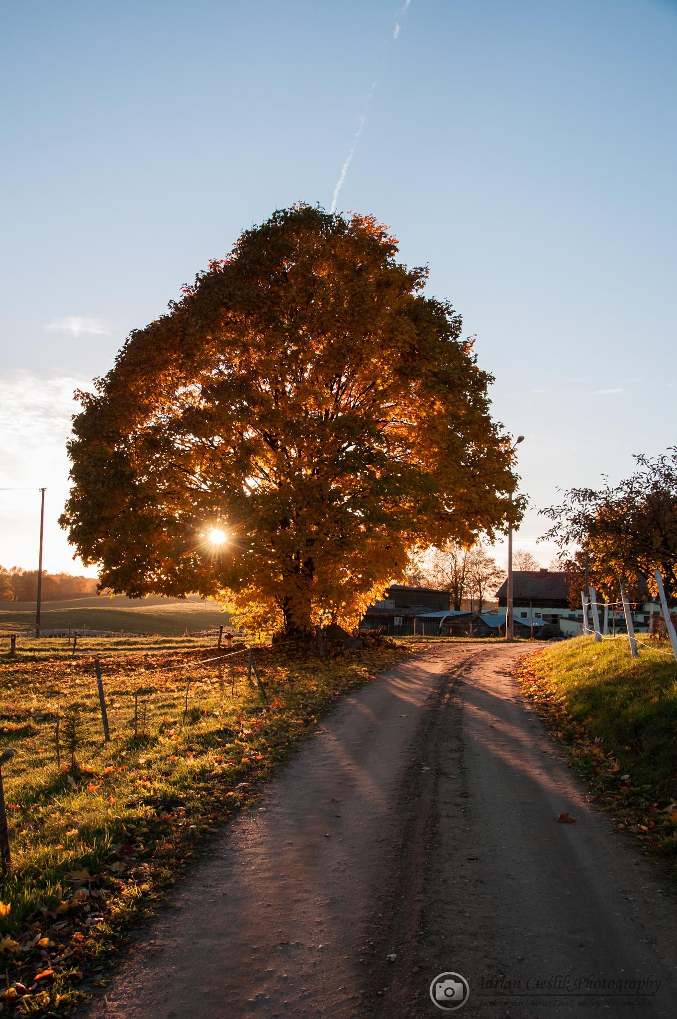 Autumn by ADCFOTO