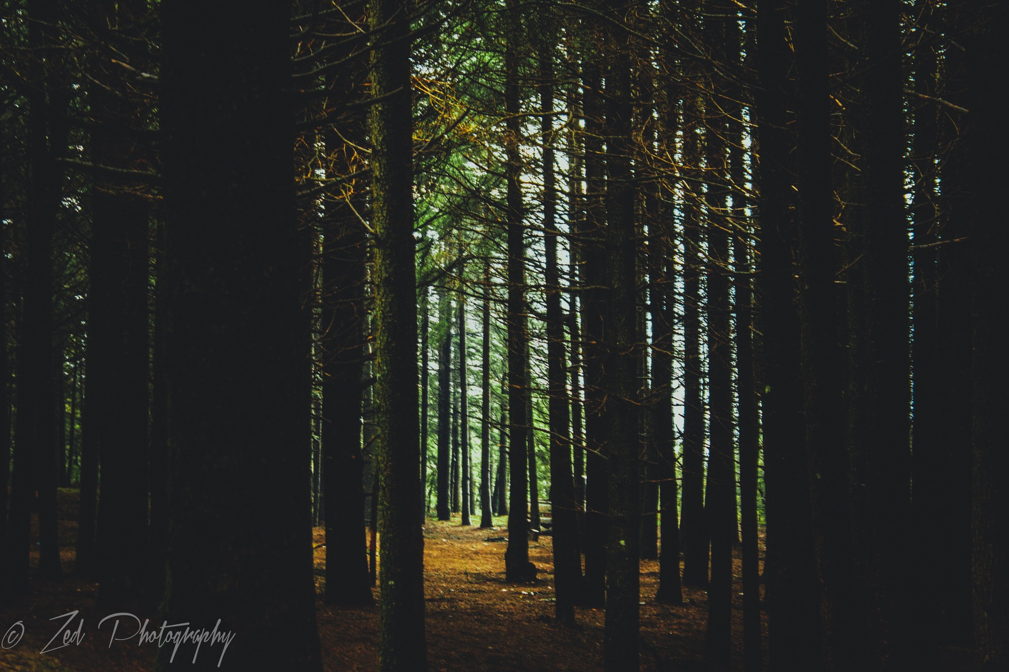 dark forest by ✨Zed_photography✨