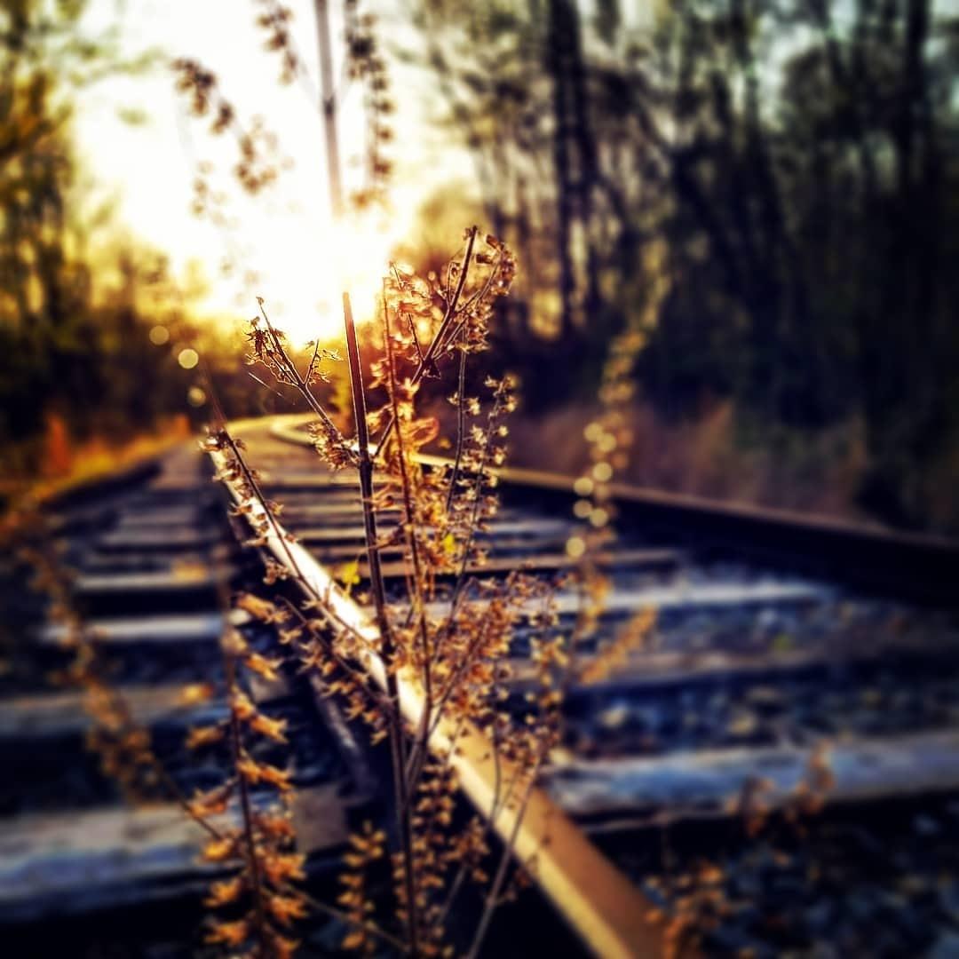 train tracks by David Lincoln
