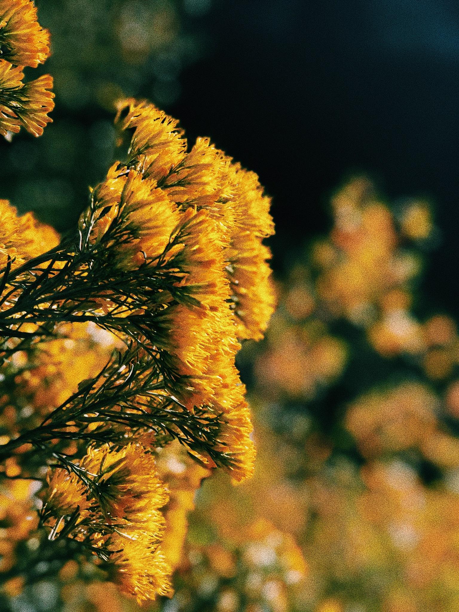 Flowers  by ᴛᴇᴢᴢᴀ ᴘʜᴏᴛᴏɢʀᴀᴘʜʏ