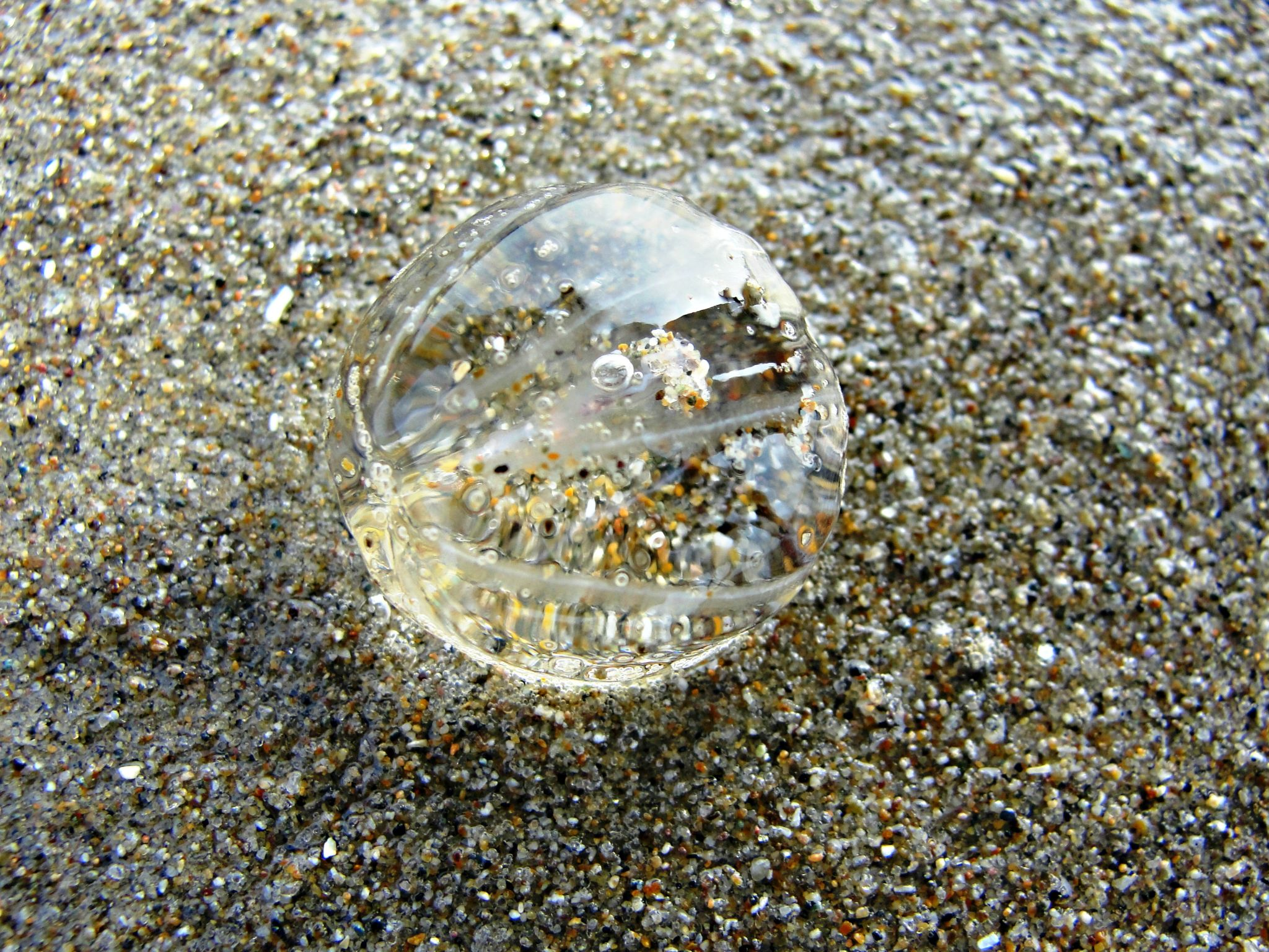 Sea Gooseberry  by SashaMarie Photography