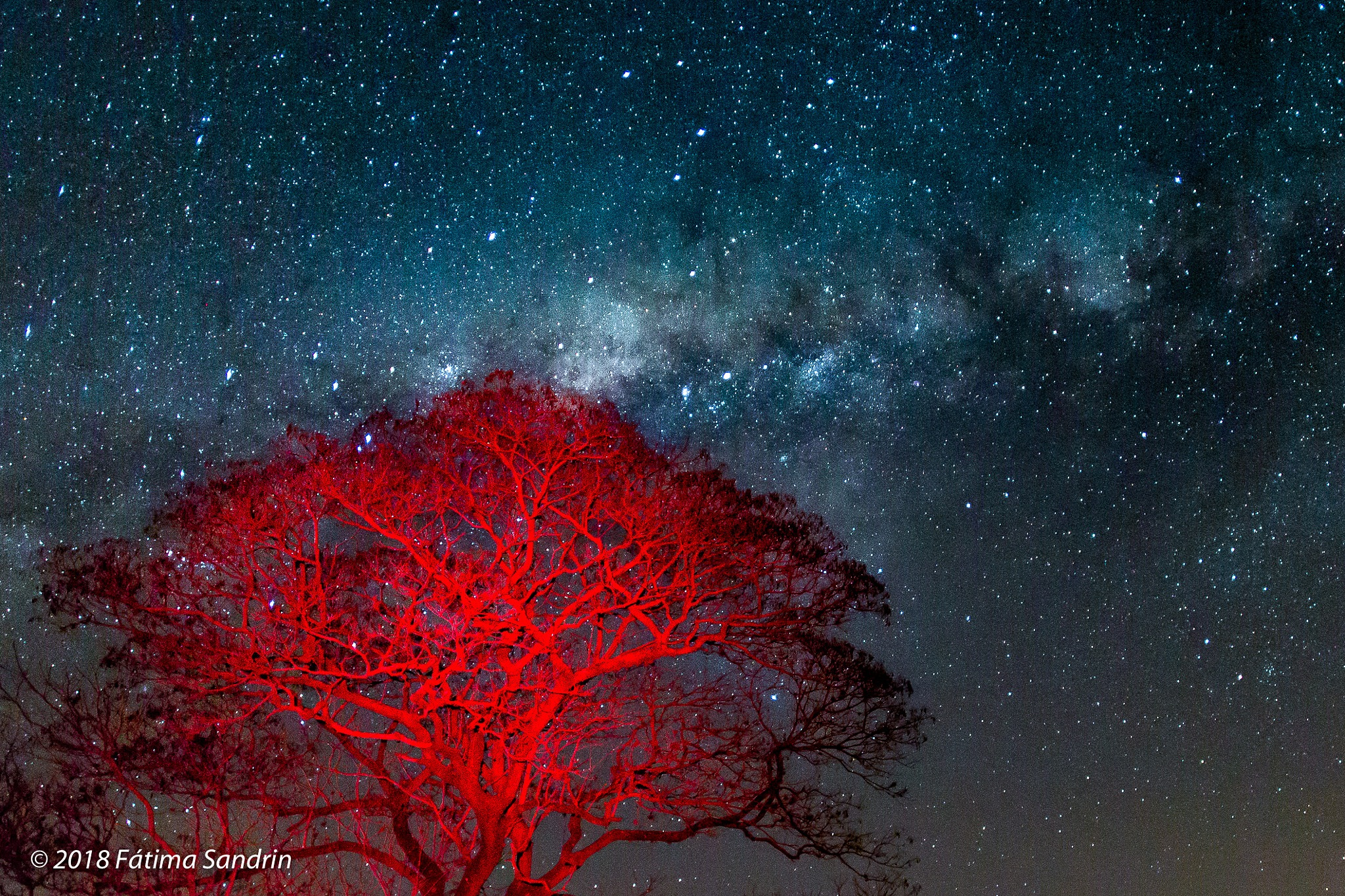 Red tree and The Milky Way by Fátima Sandrin
