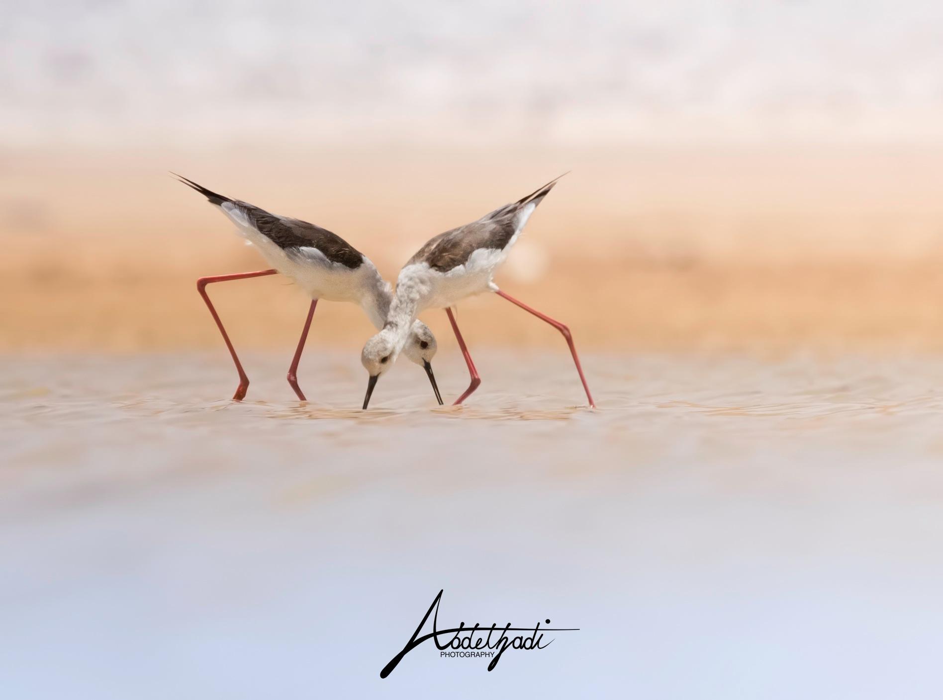 Untitled by Abdel Hadi