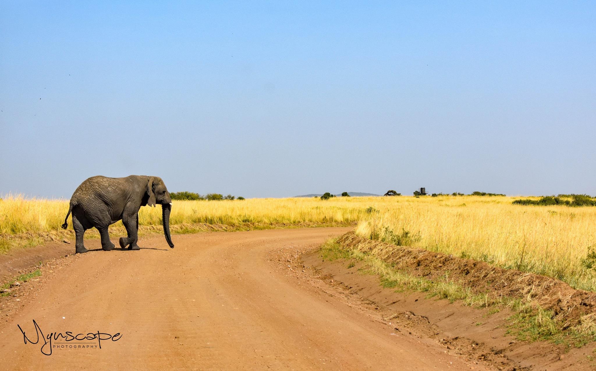 African Elephant  by Michelle Melanie