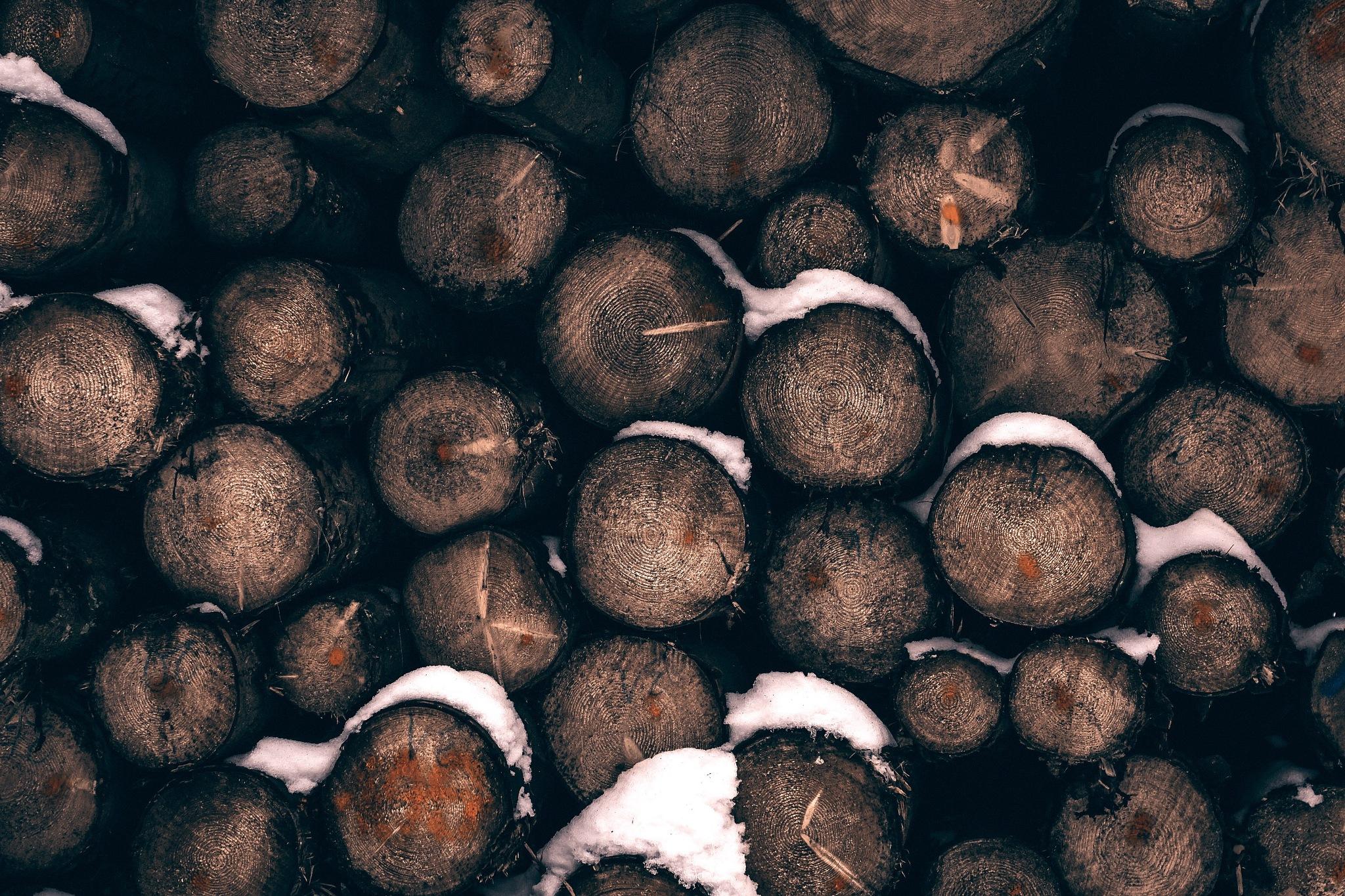 Black Forest Woods by Stefan Köhler