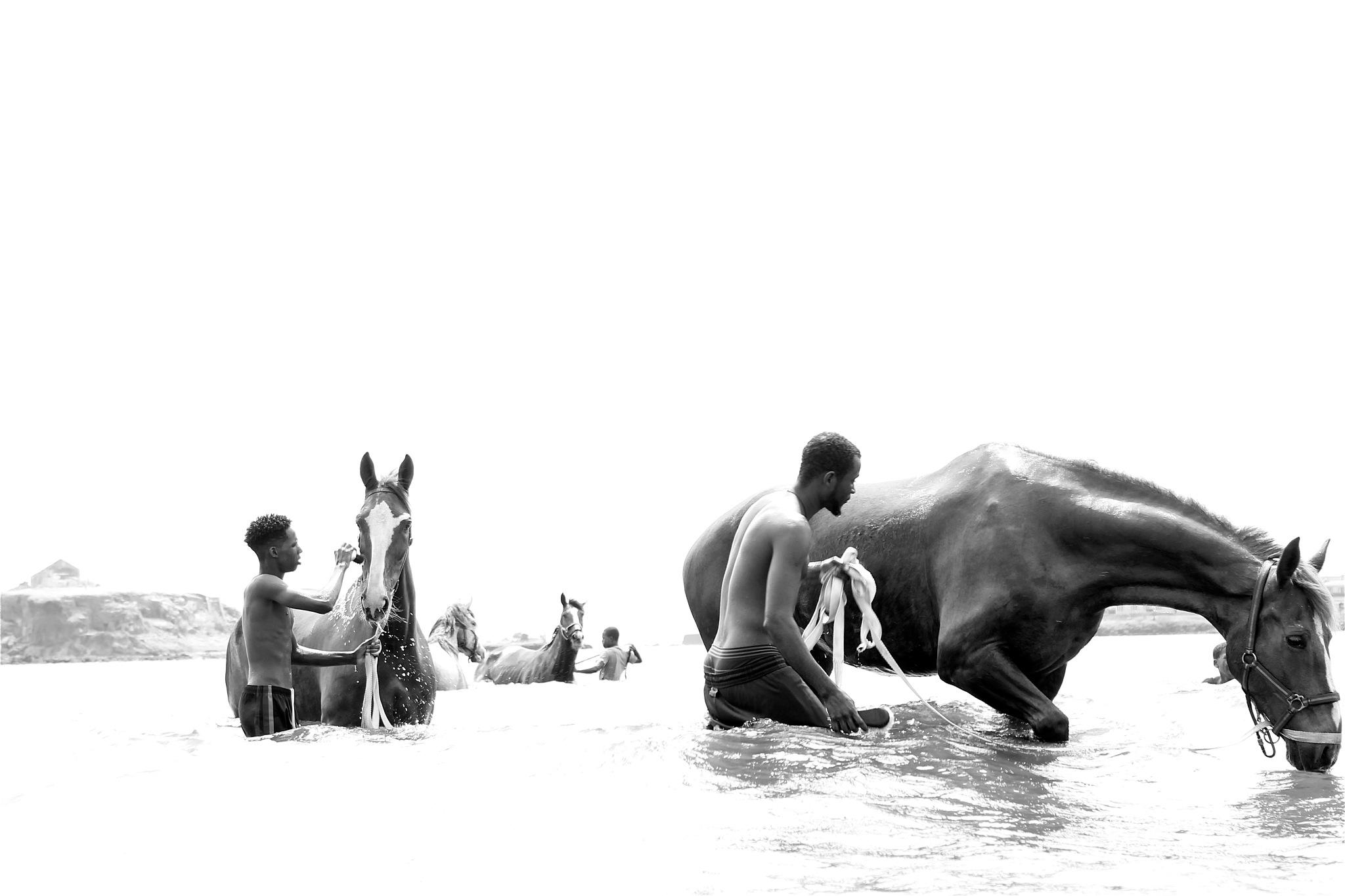 INTELI(GENTES) ANIMAIS #24 by H. Paz Monteiro