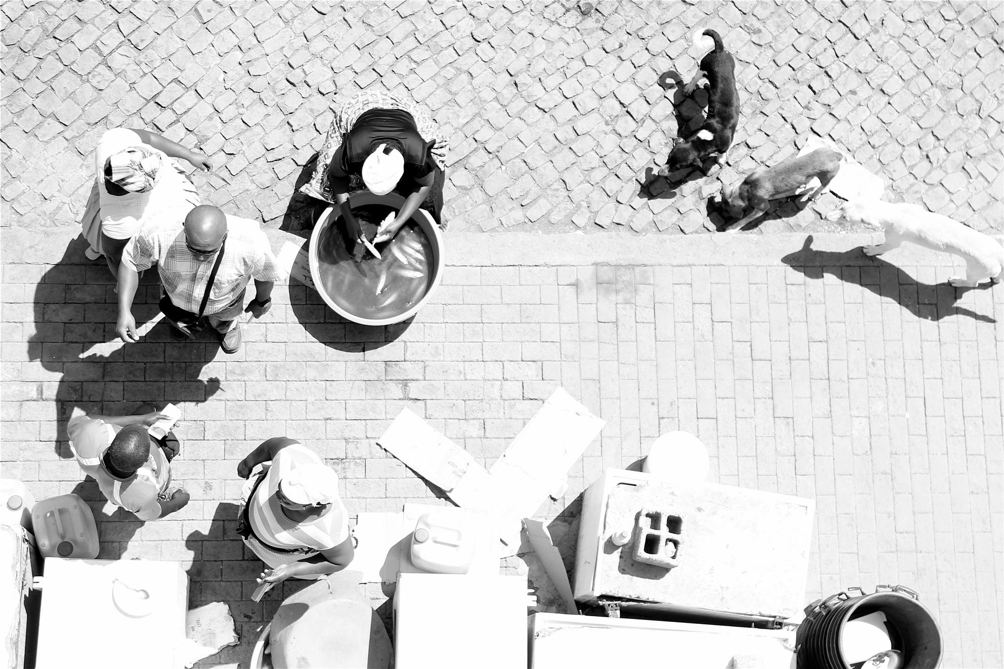 (EU) AQUI (TREIN)ANDO... 3/5 - H. Paz Monteiro by H. Paz Monteiro
