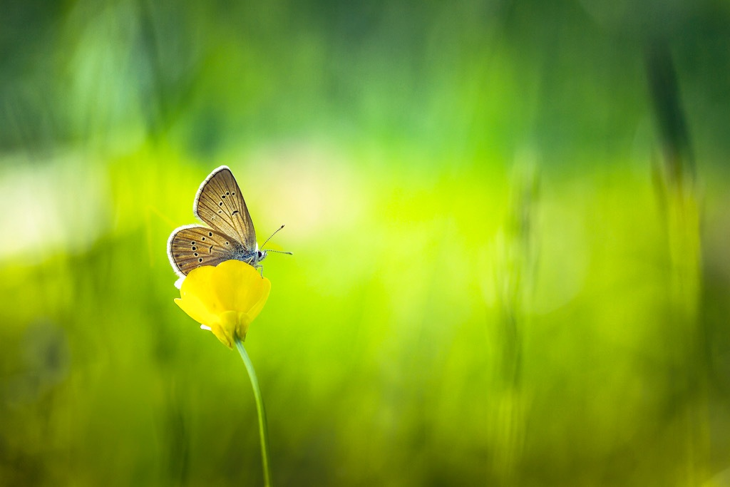 Butterfly  by Bmphotographe
