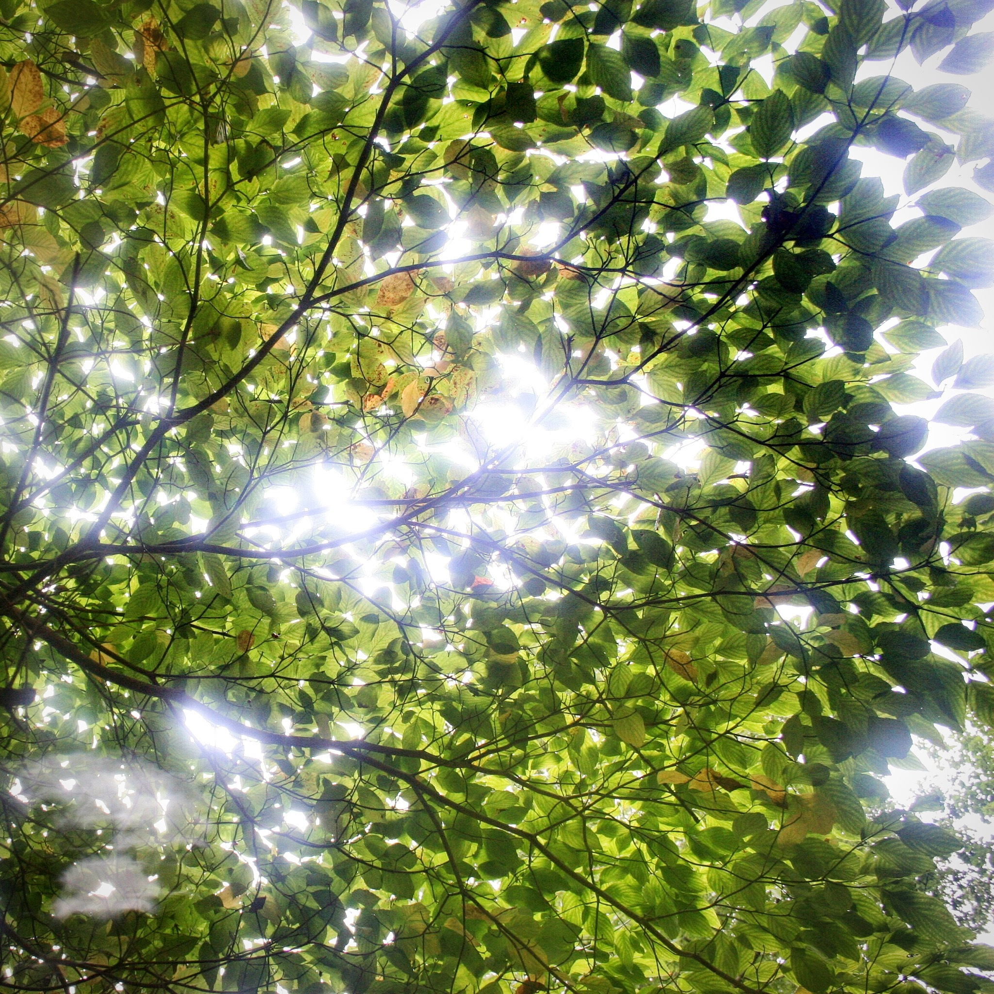 Light through the leaves by Diego Alfonso Contreras