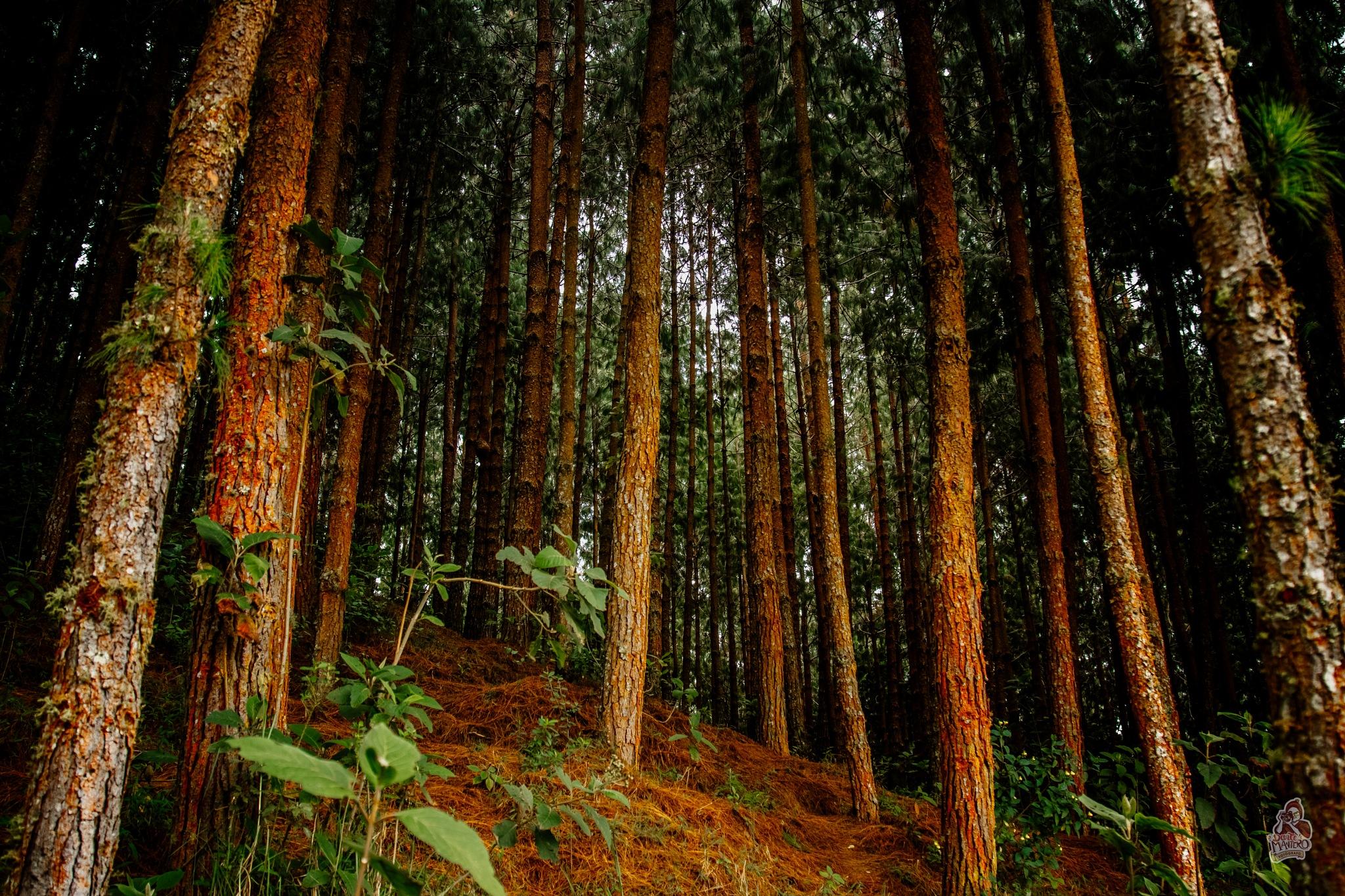 En el Bosque by Dante Mantero Mendoza