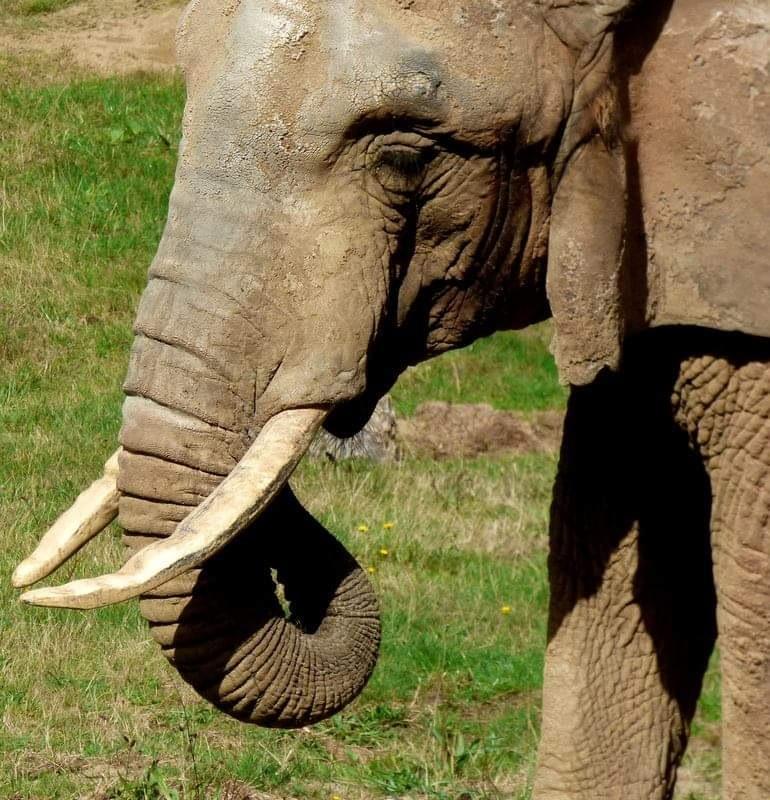 wildhearted elephant  by Gina-marie Morgan