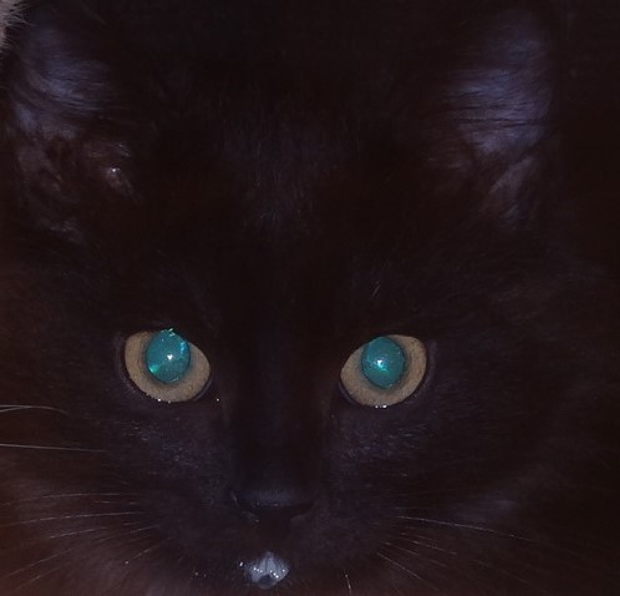 Focus on the kitten's eyes at night by Francine Waterman
