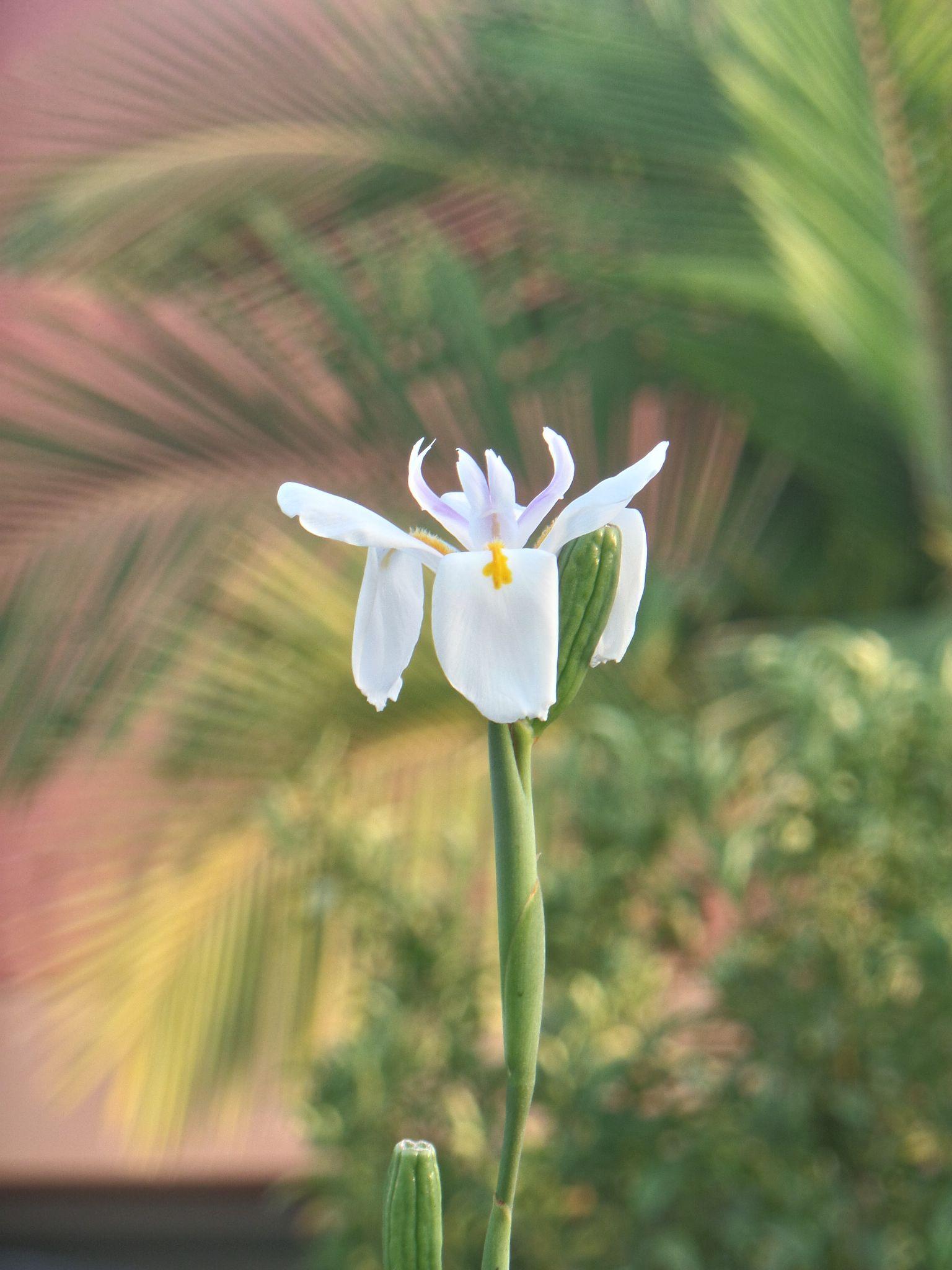 Flower near a restaurant in Natanya by Francine Waterman
