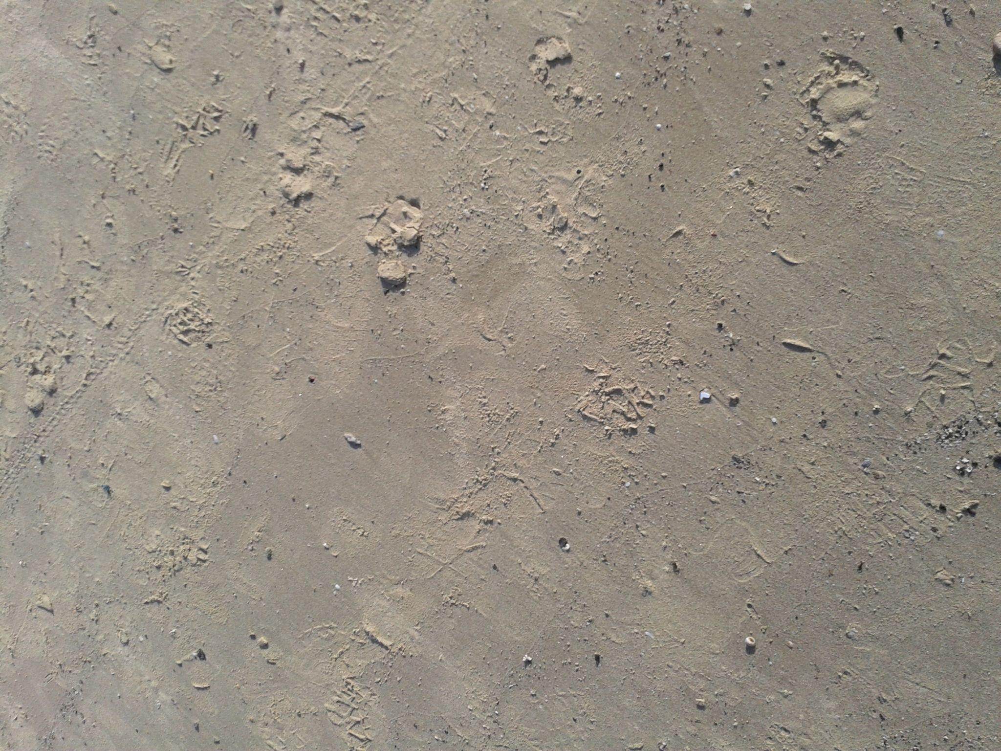Wet clean sand by Francine Waterman