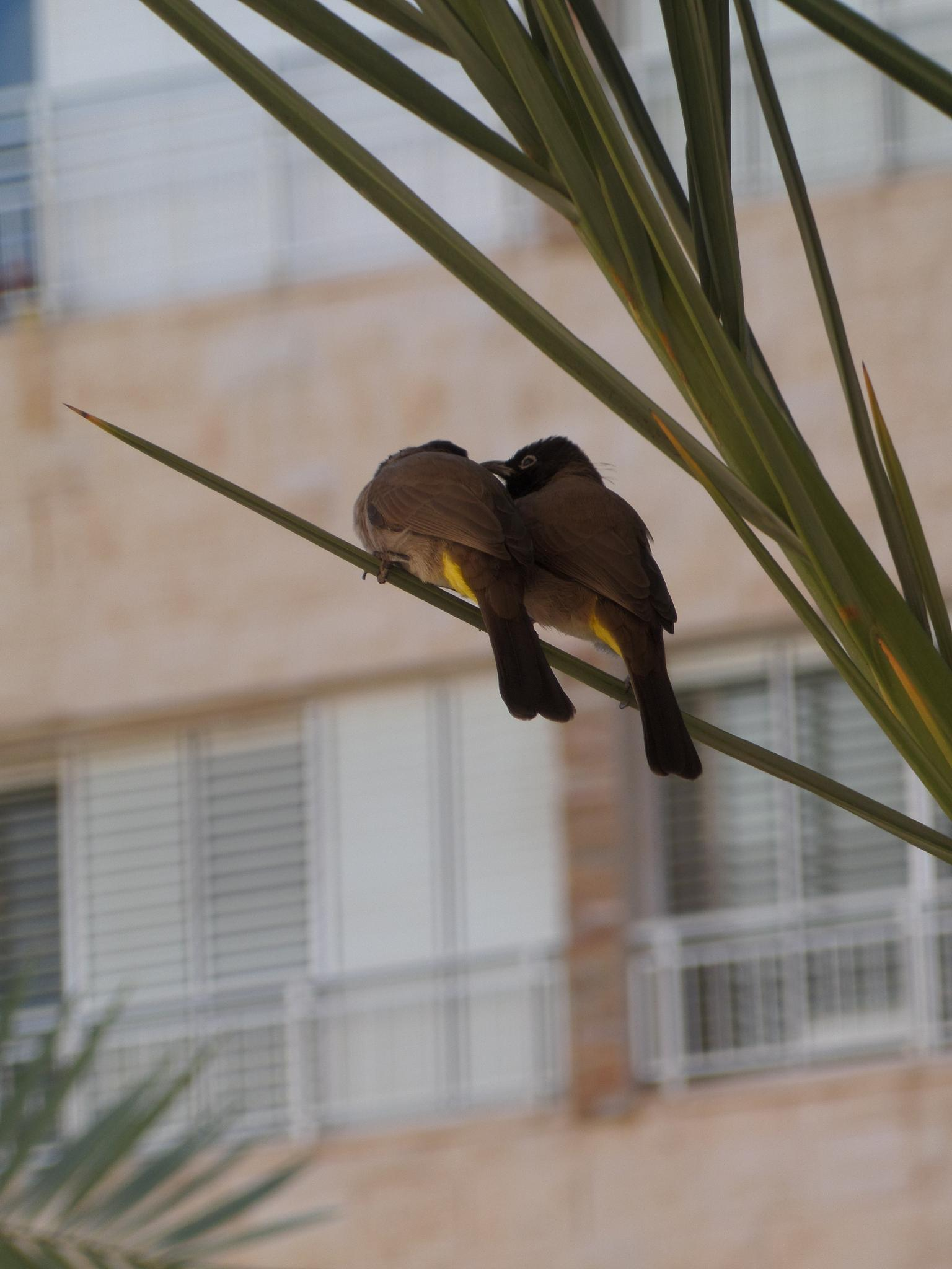 Photo in Animal #bird love