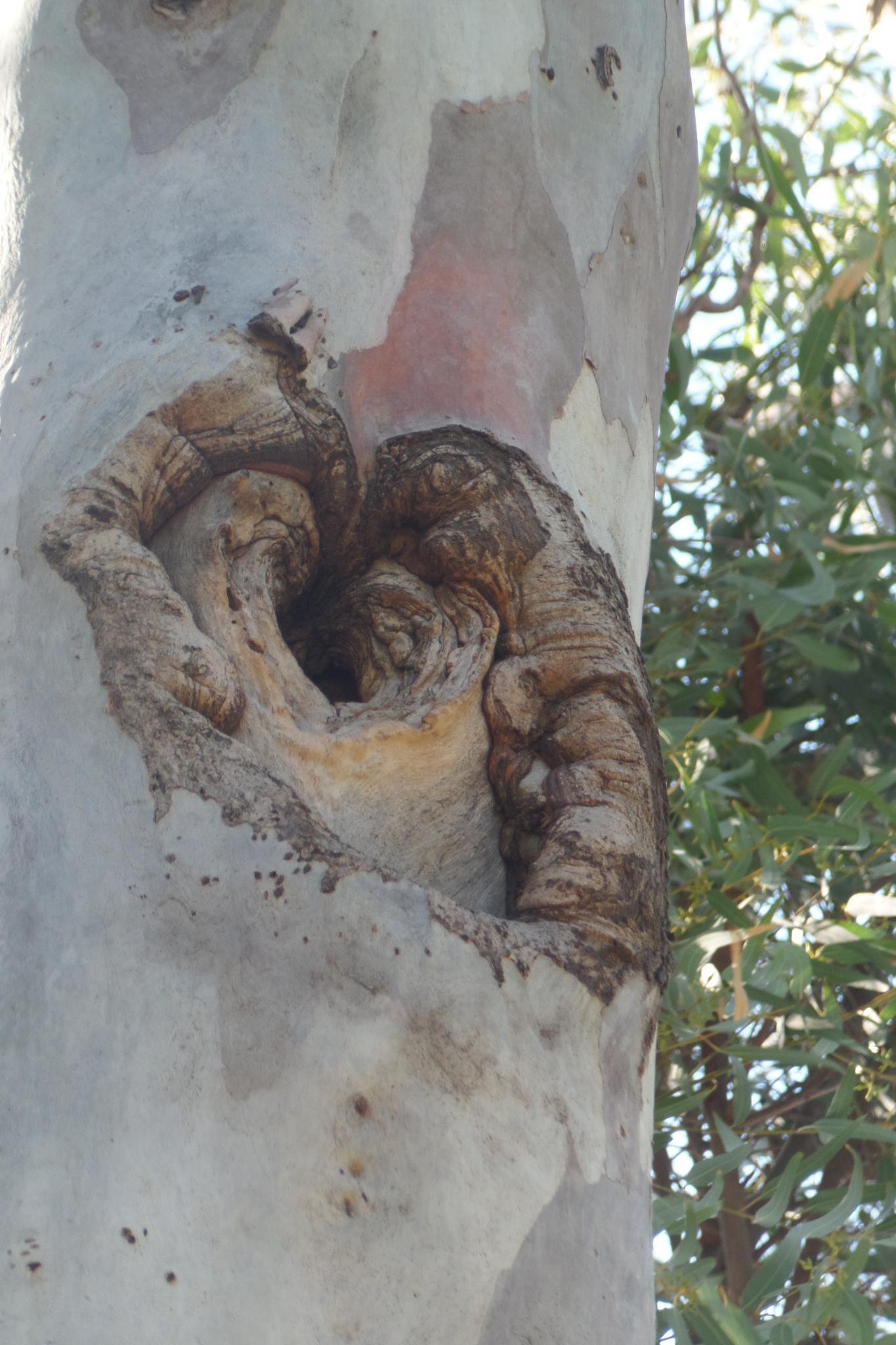 Nest by Francine Waterman