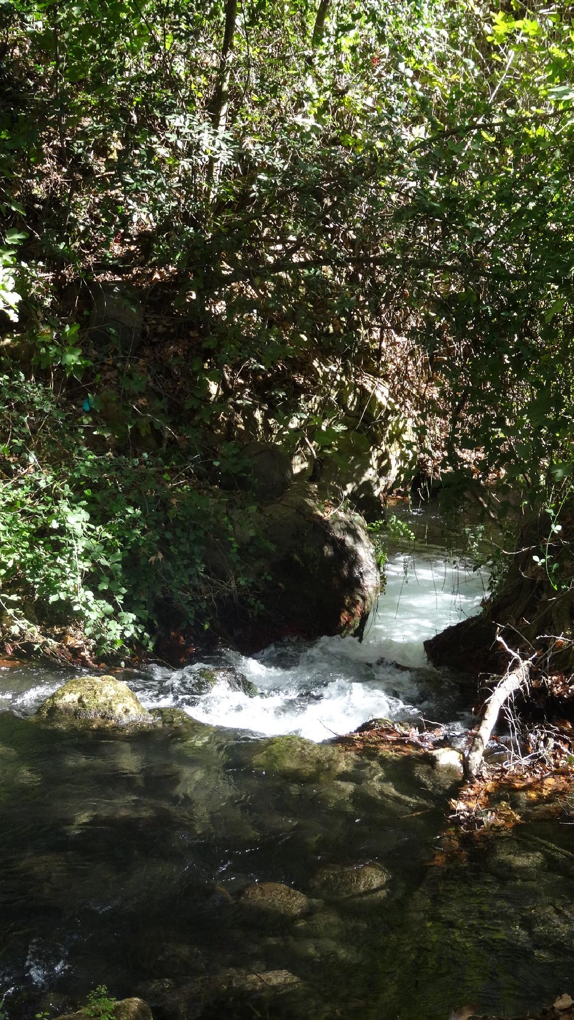 Banias springs by Francine Waterman