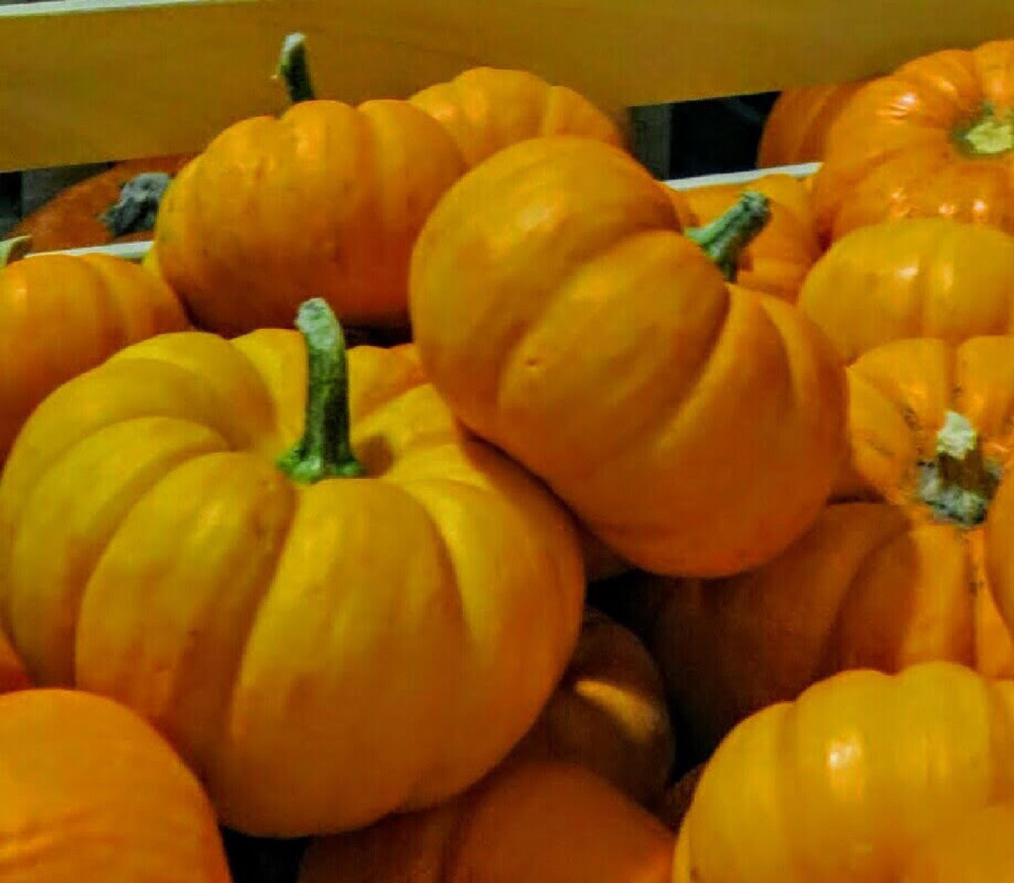 Pumpkins by lynnsnow58