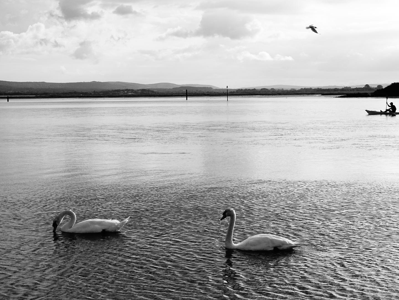 Swan lake by dpumphrey138