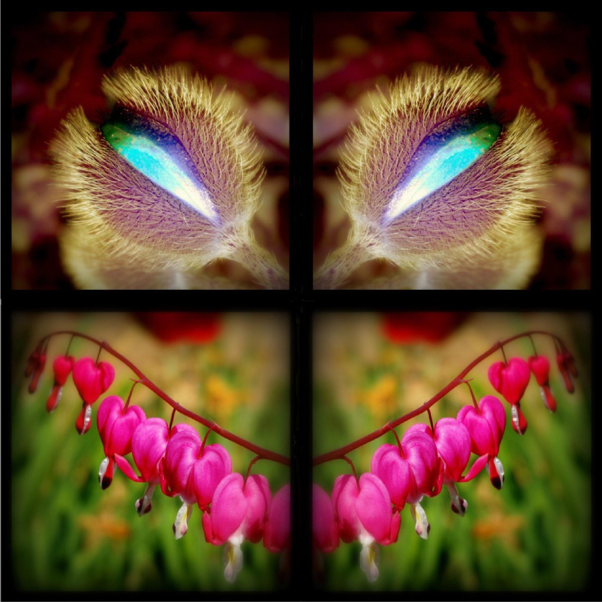 Mirrored - Hidden World #3 by Talosi Laszlo Photography