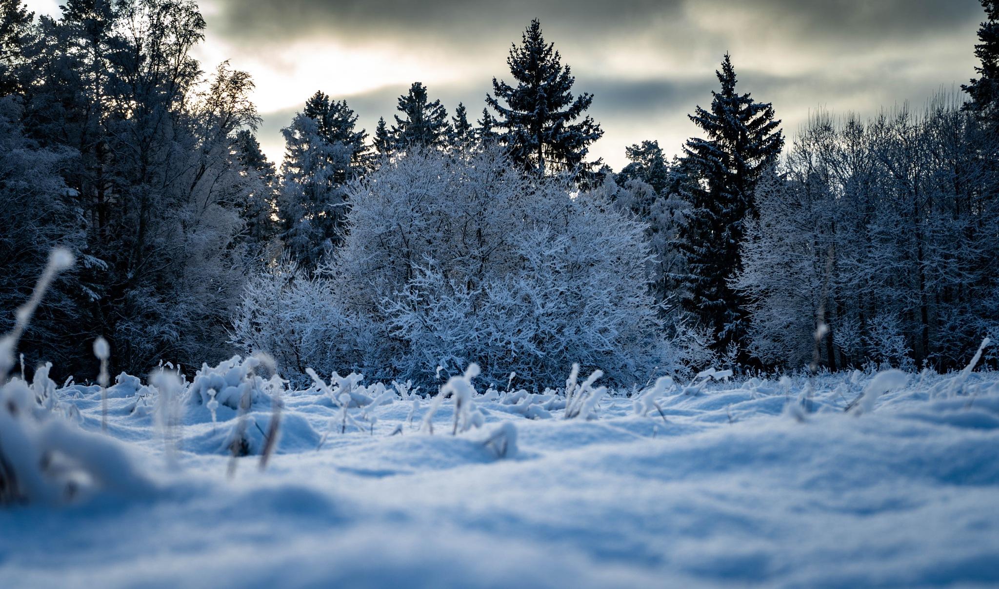 Winter in sweden by gustavjonson