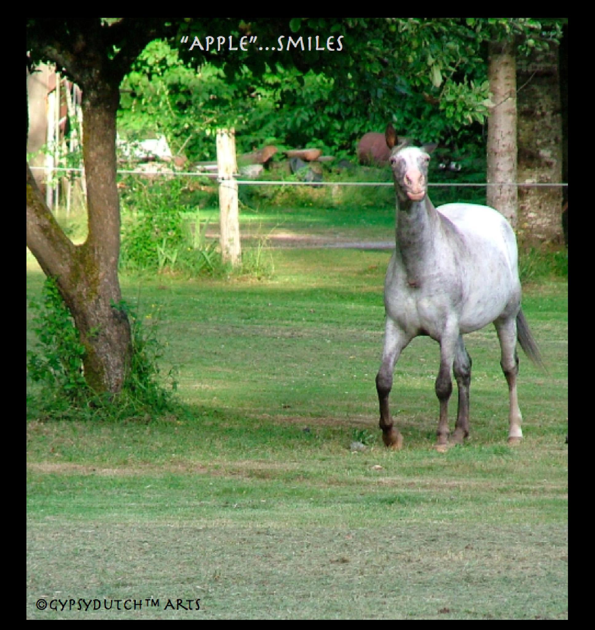 """Apple""...Smiles by GypsyDutch"