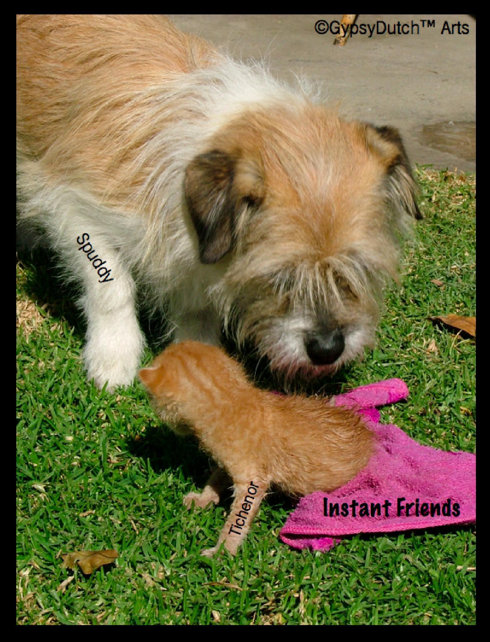 Instant Friends by GypsyDutch
