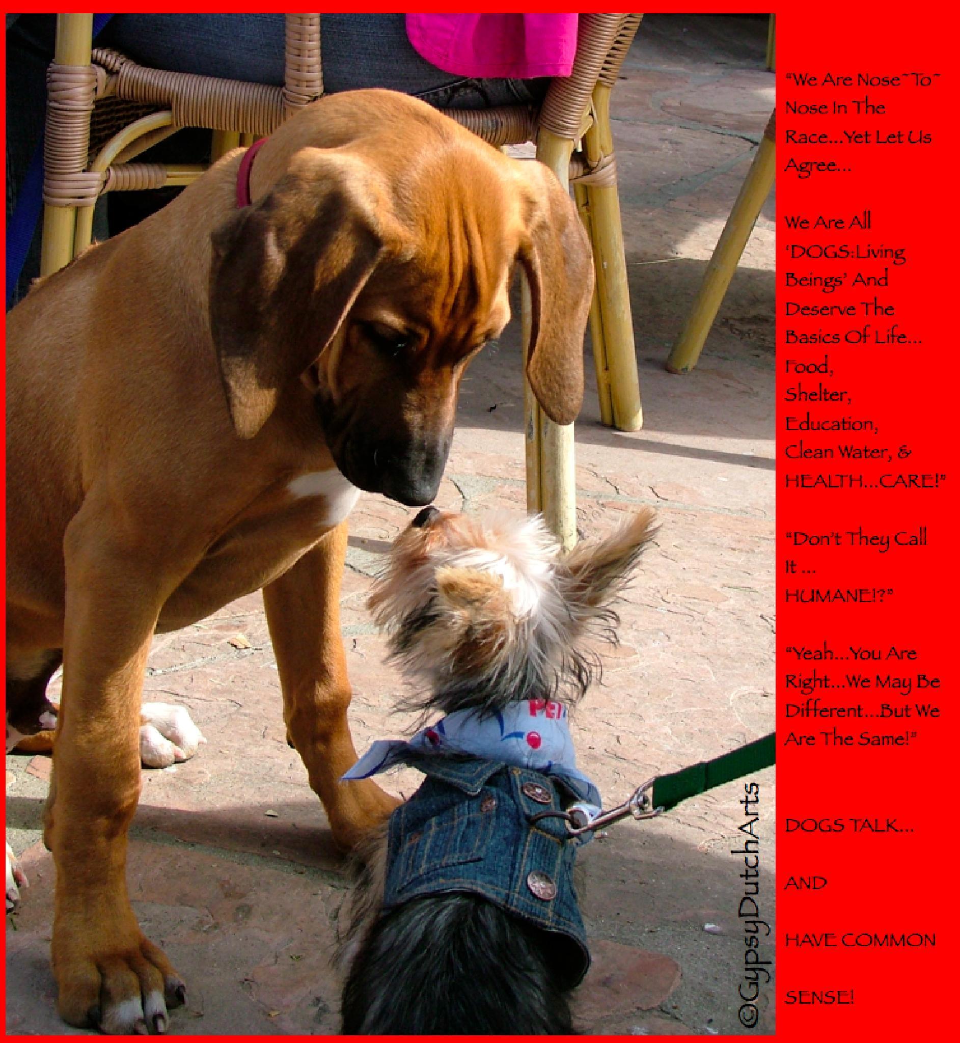Friendship Knows...collage by GypsyDutch