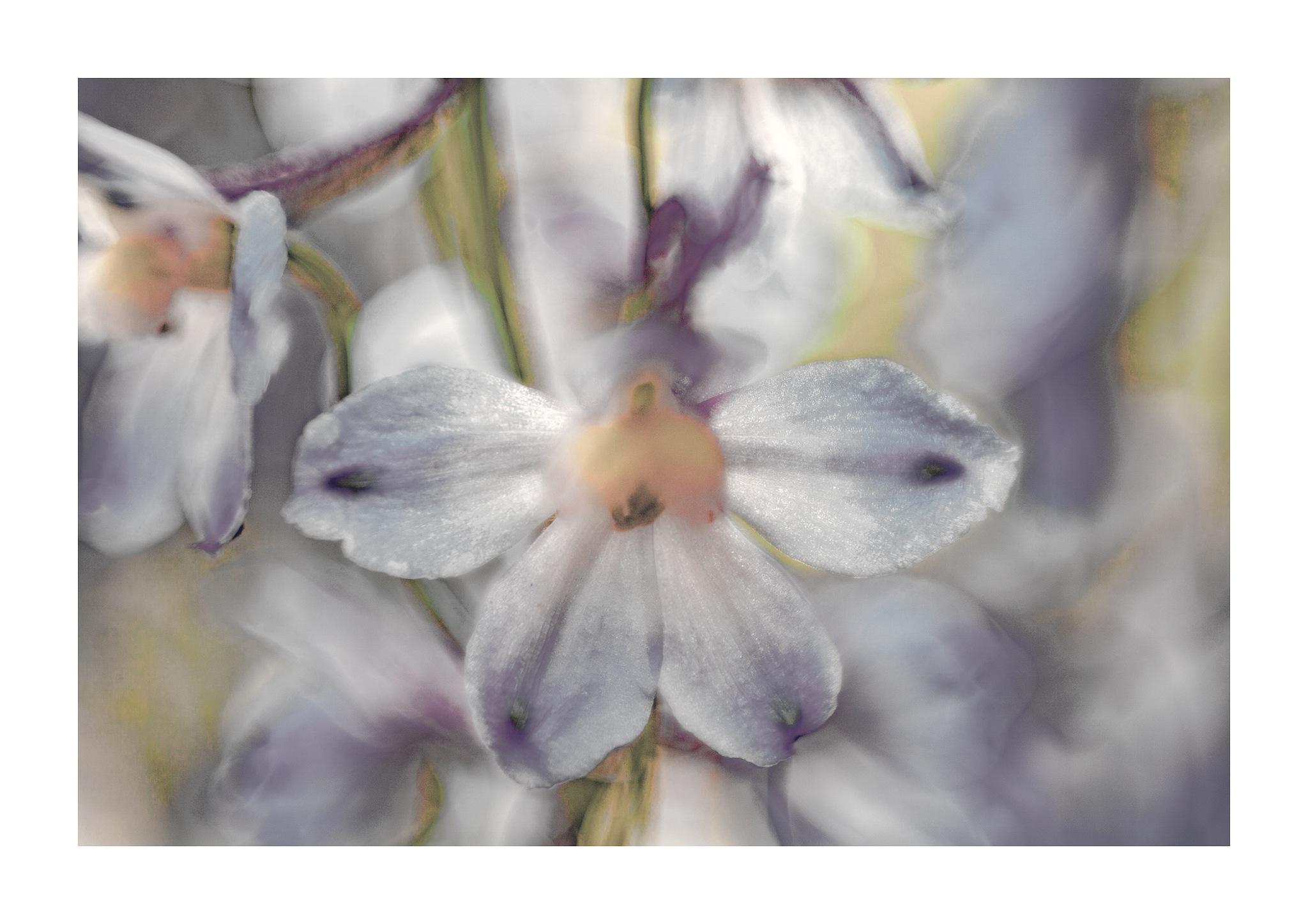 Flower-Art by rbrugm2