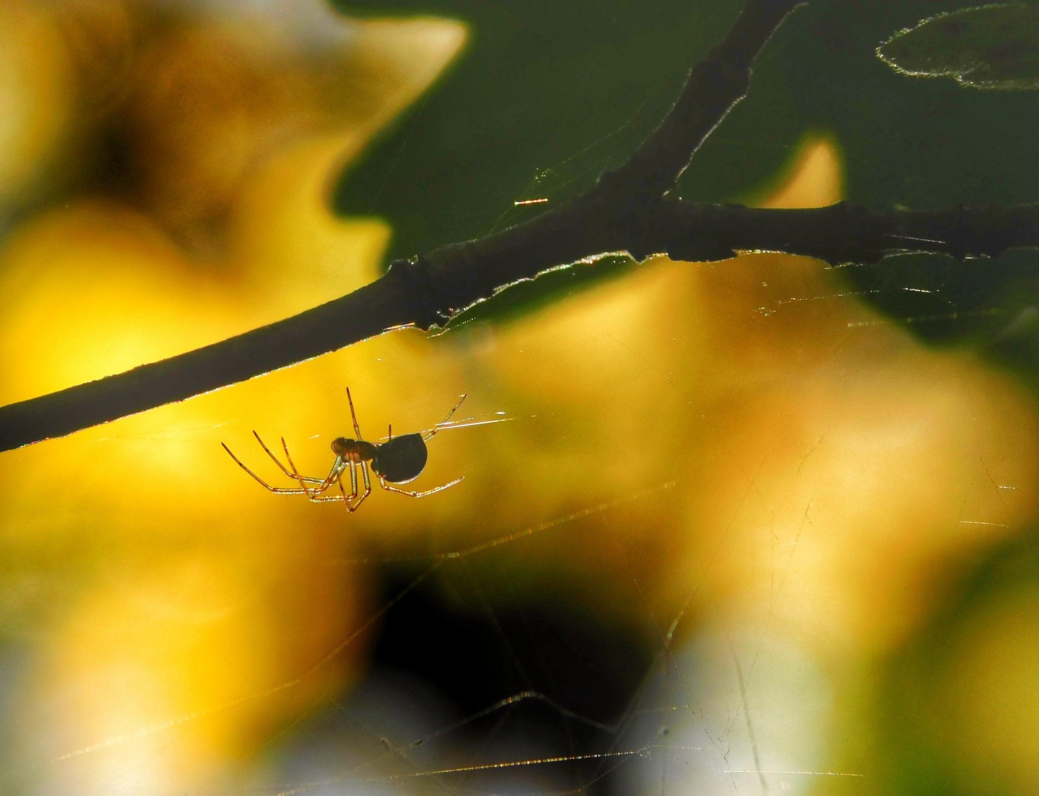 spider by Grzegorz Skwarliński