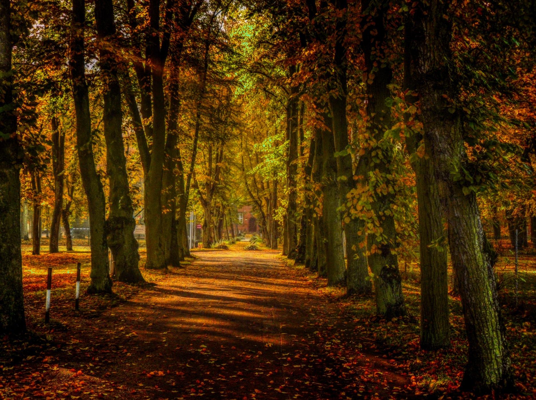 Park by Grzegorz Skwarliński