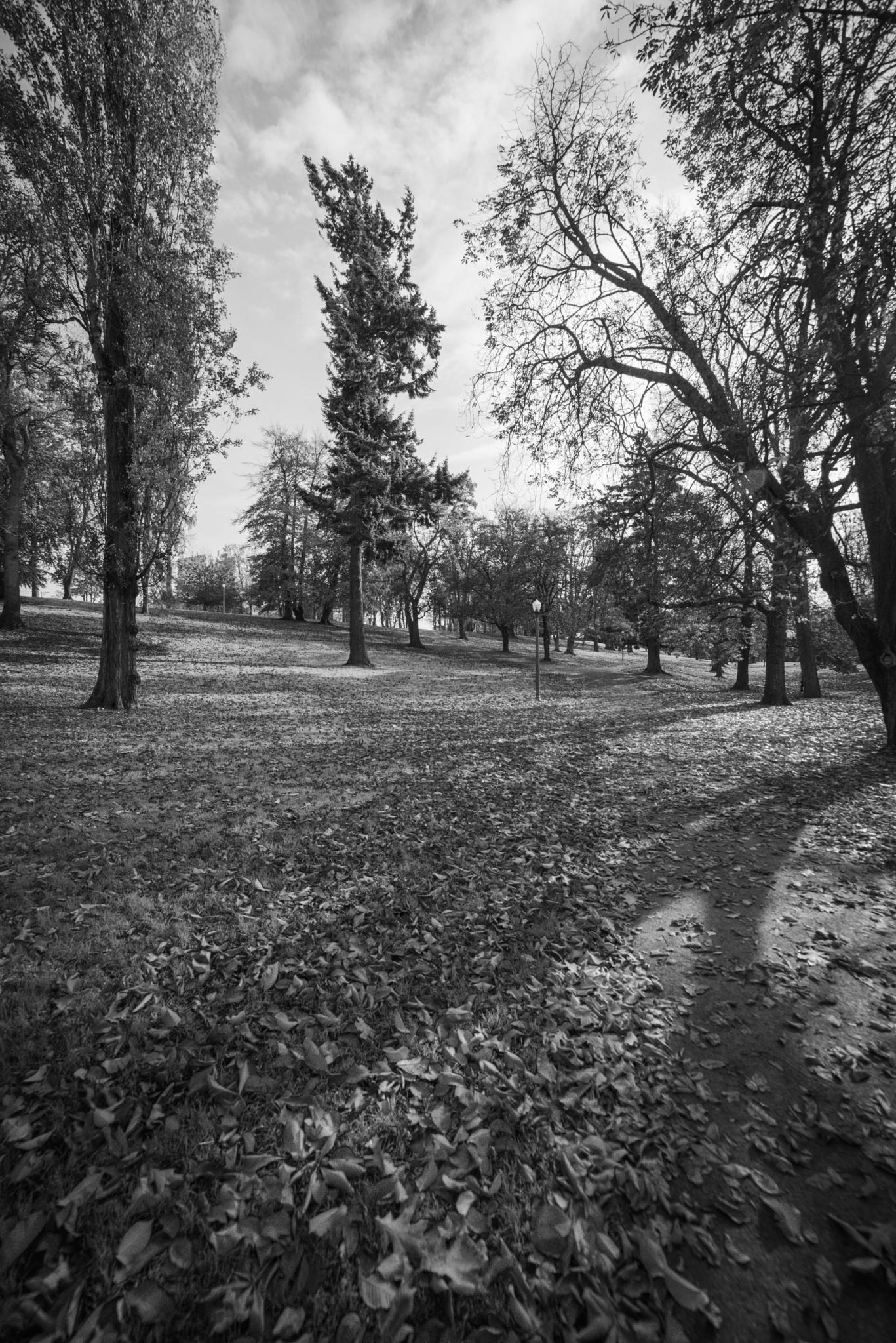 Wright Park by Jay Rinehart