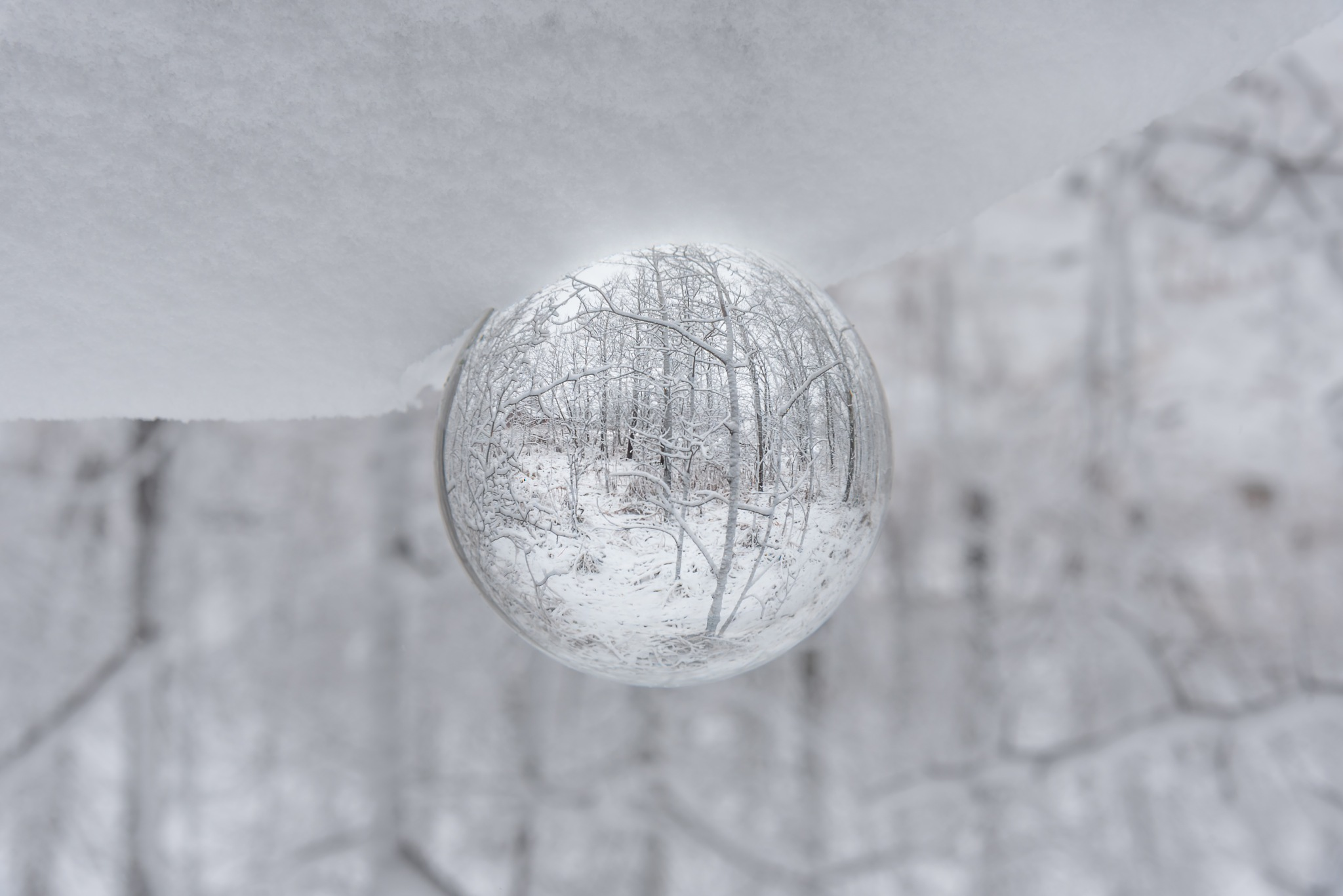 Winter by Karen Hase