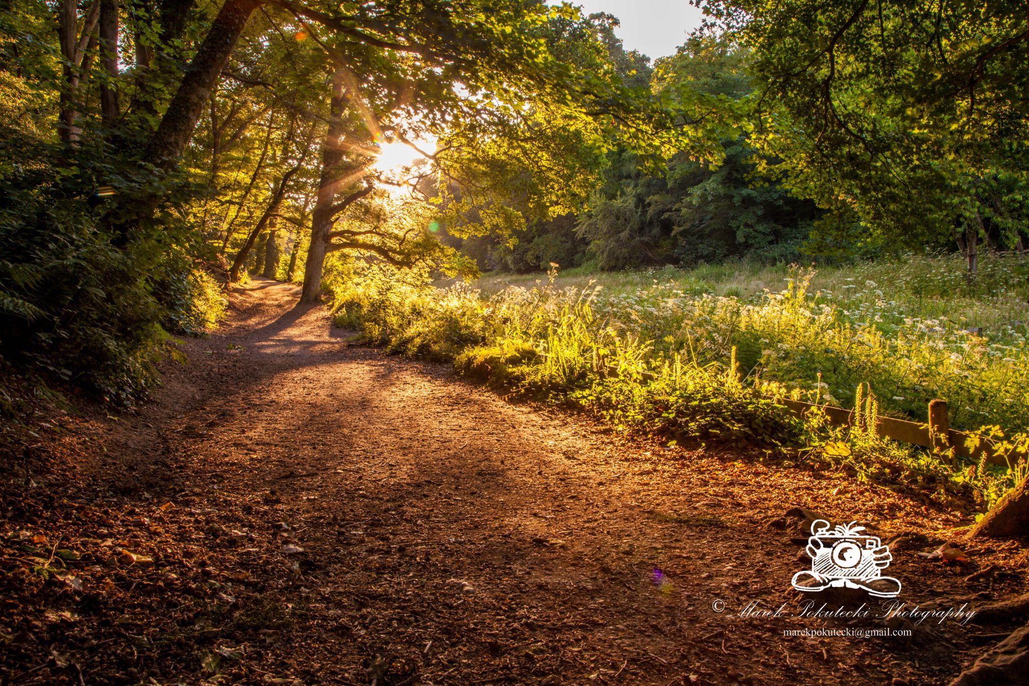 Golden path by Marek Pokutecki