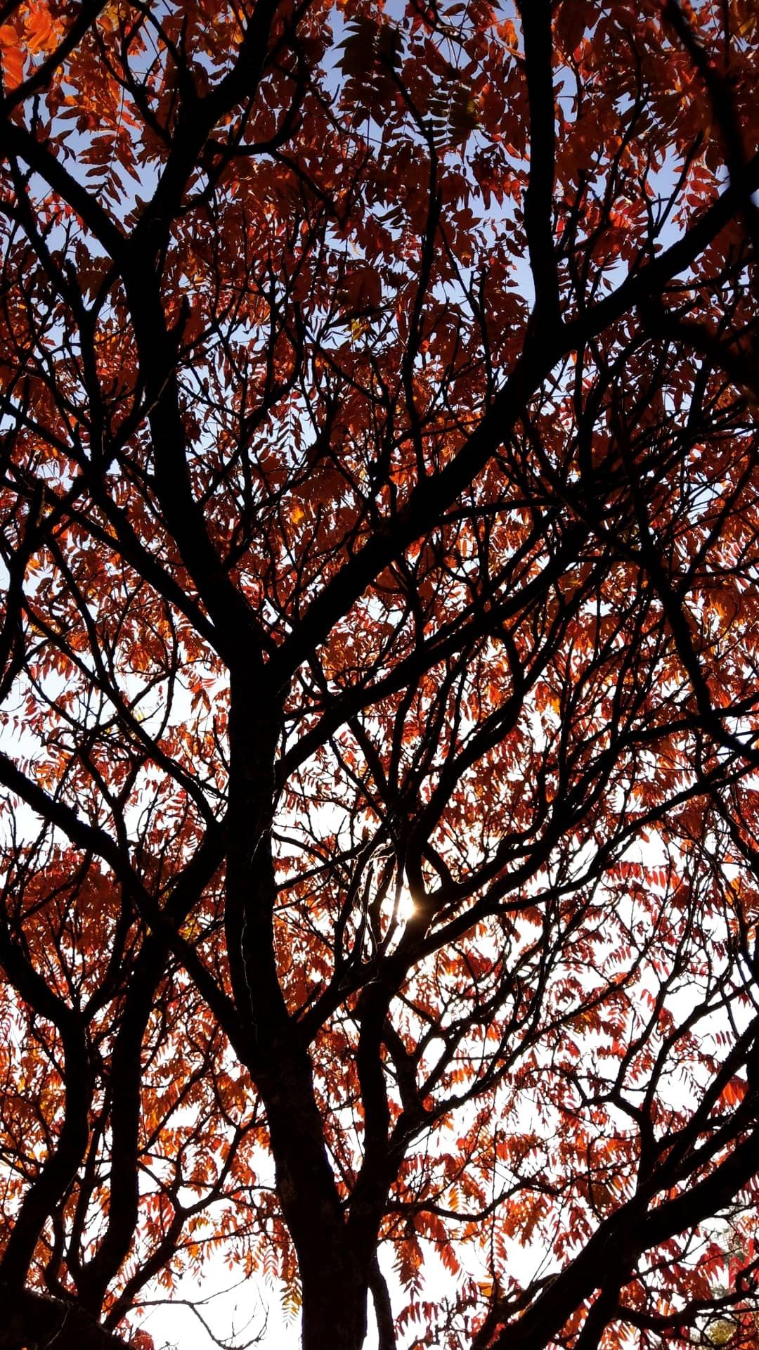 Autumn  by true_vagabond