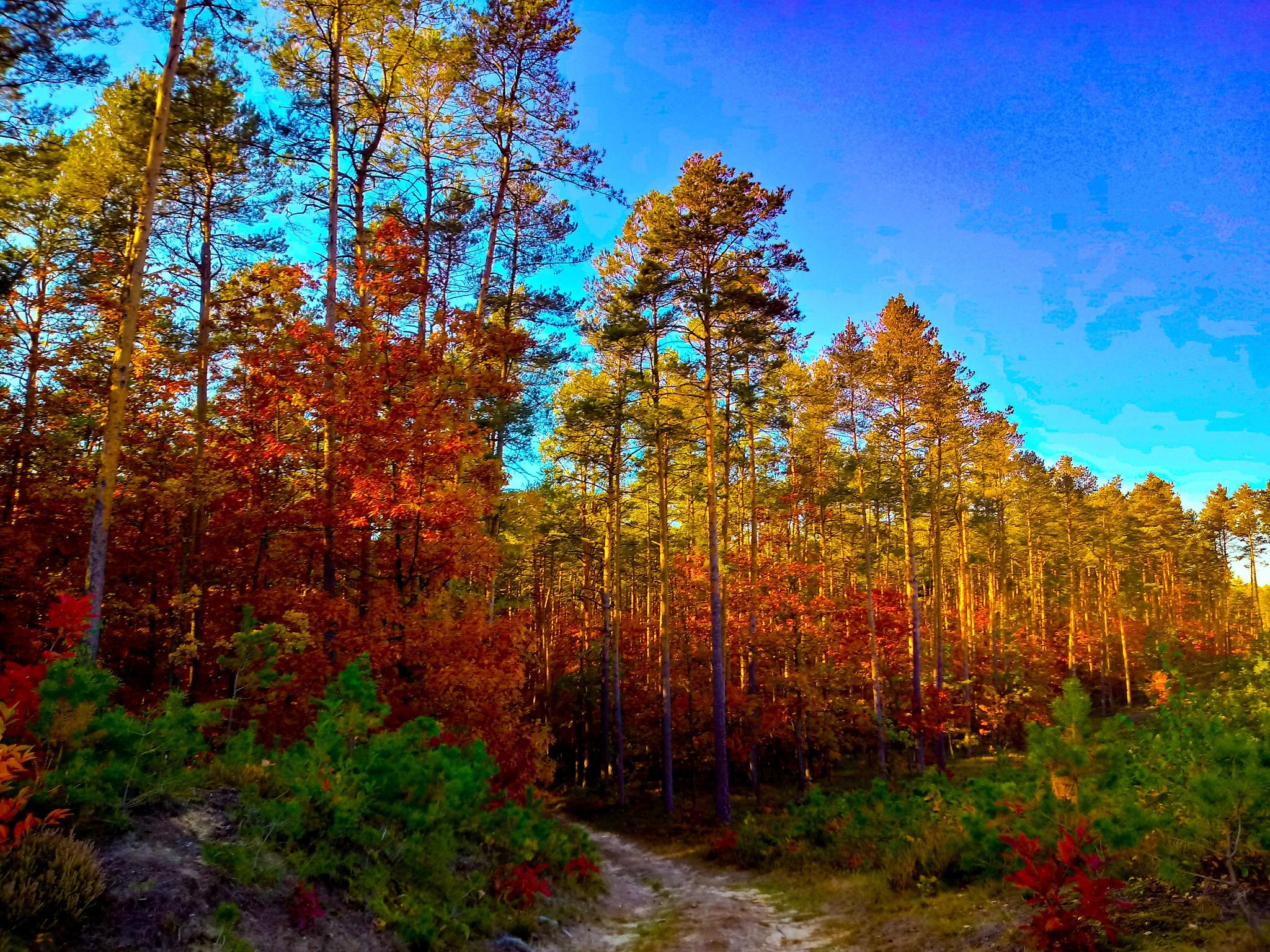 autumn by schack1989