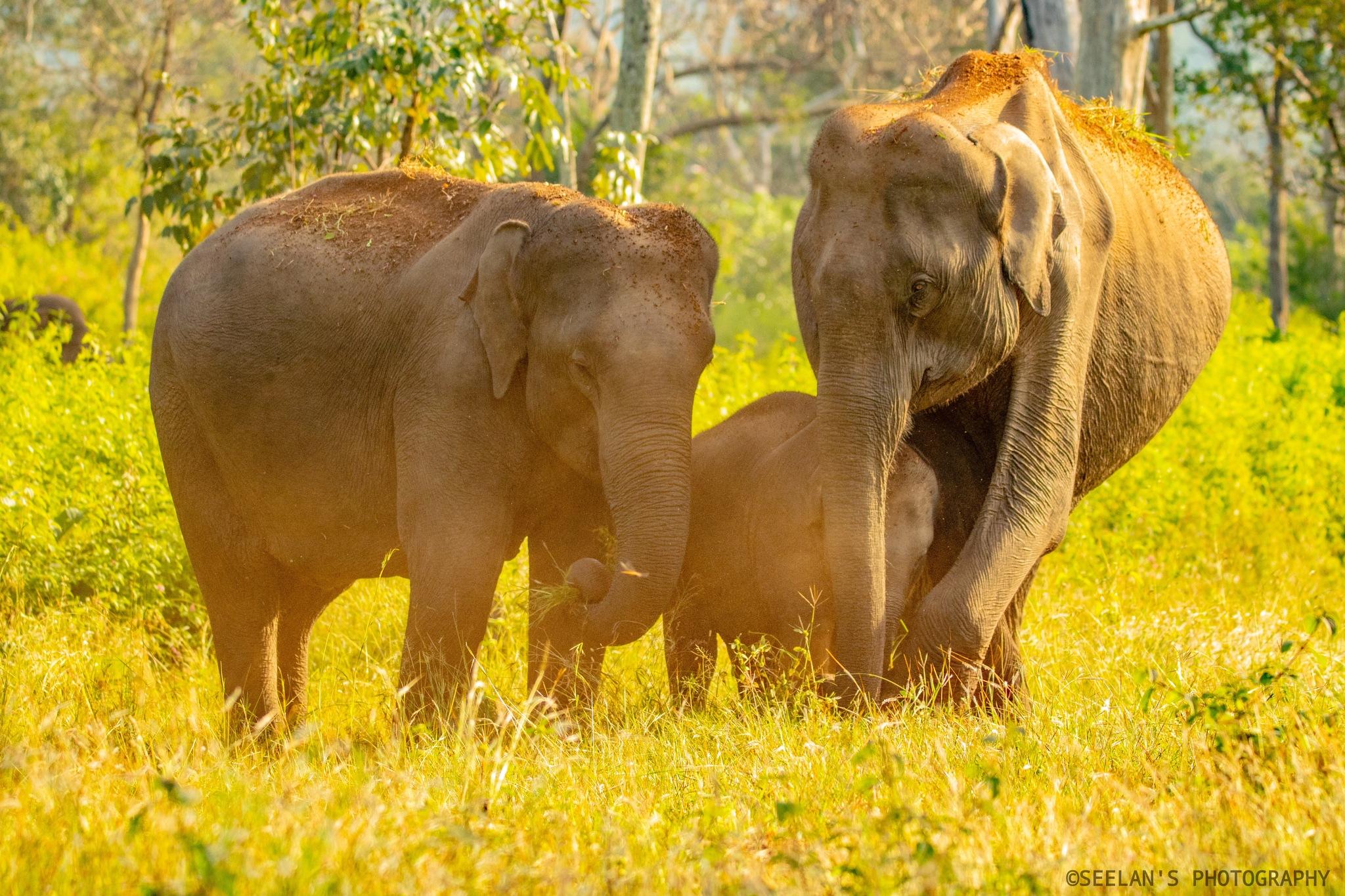 Elephant family portrait  by   SATHIYASEELAN
