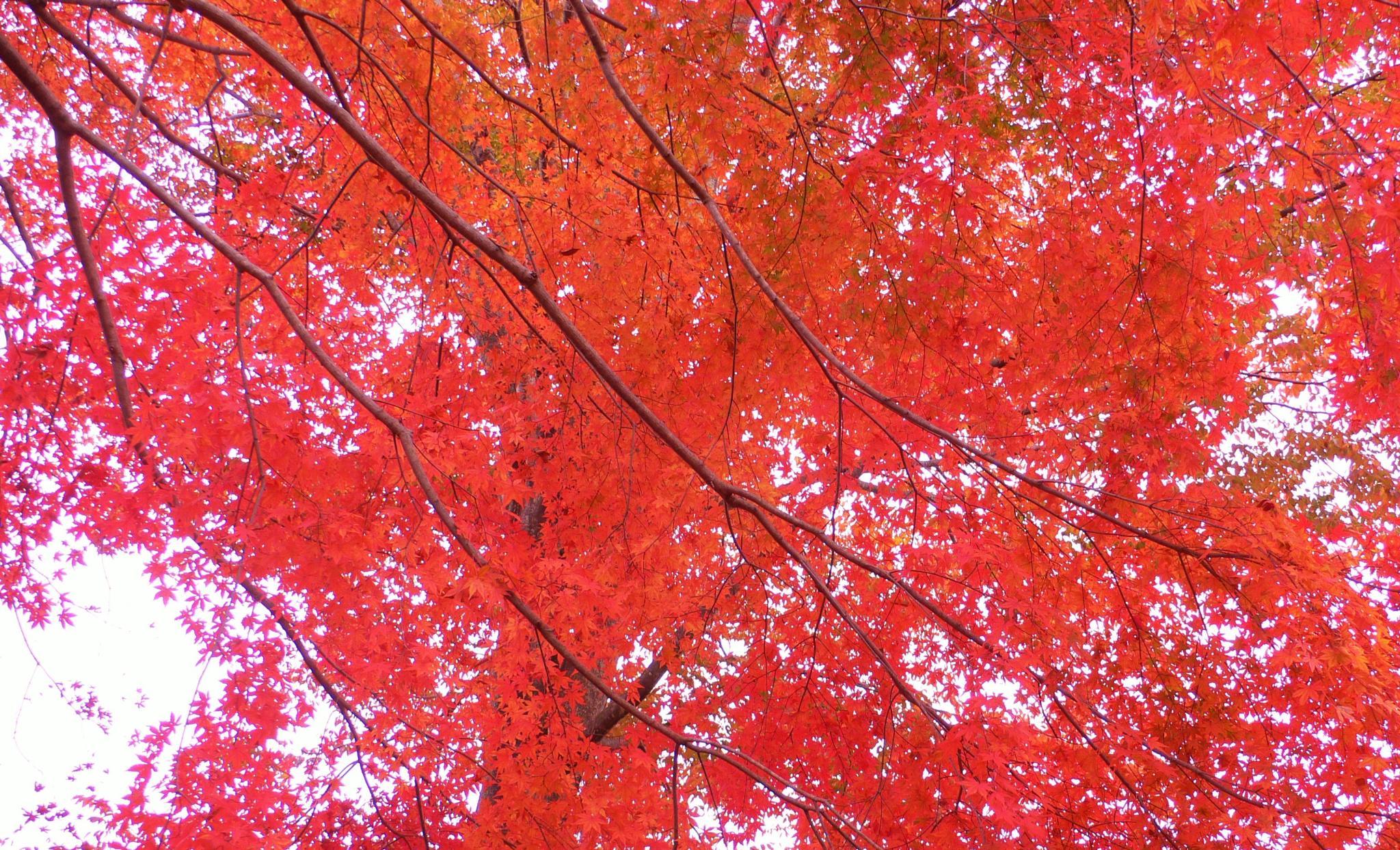 Untitled by Hisashi.Nagahiro