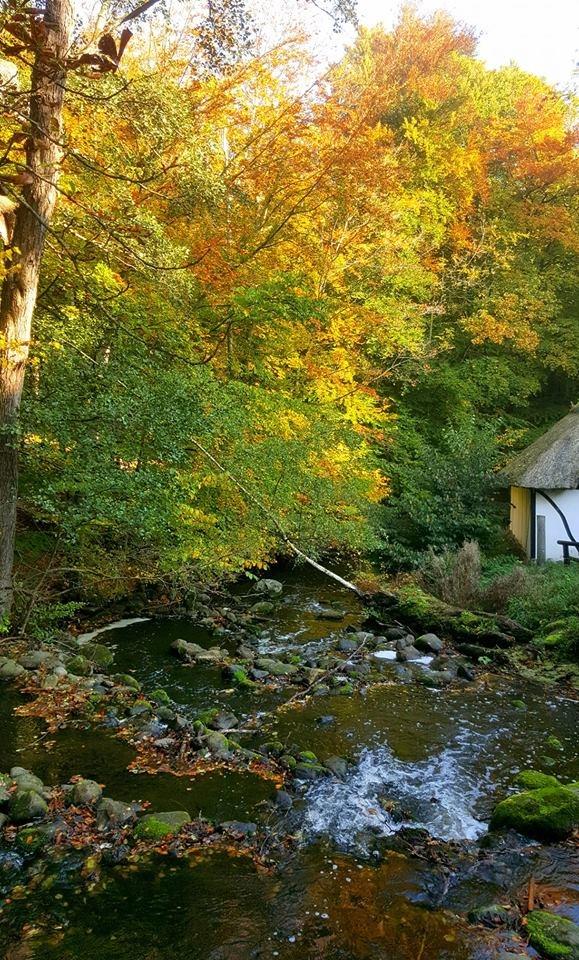 Autumn River by Anne Birgitte
