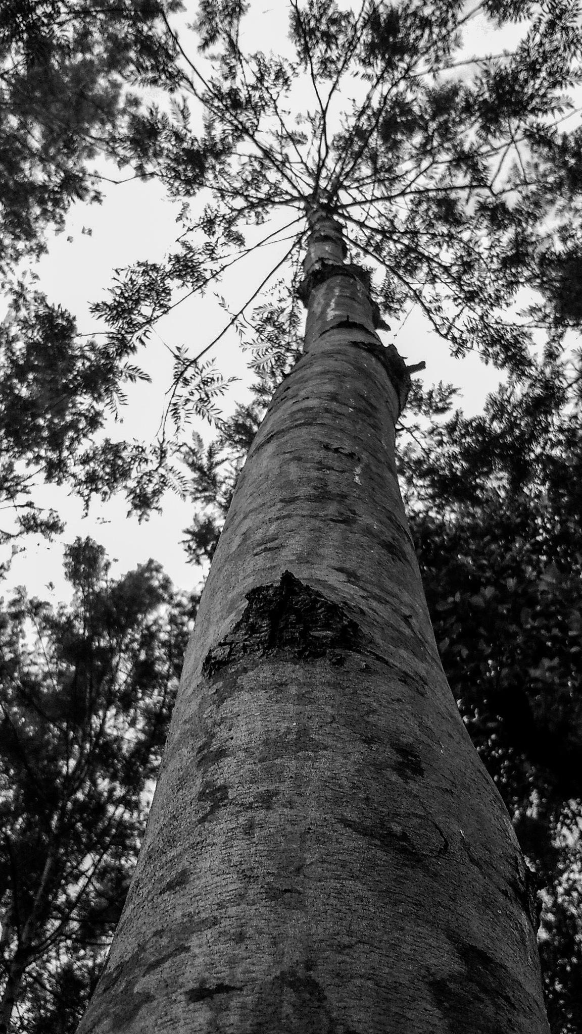a tree by sharan balan