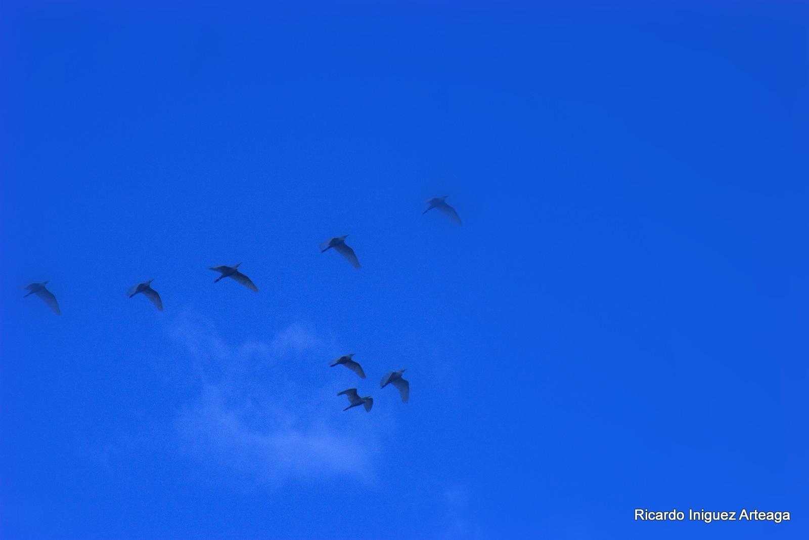 Vuelo bajo el cielo azul by Ricardo Iniguez Arteaga
