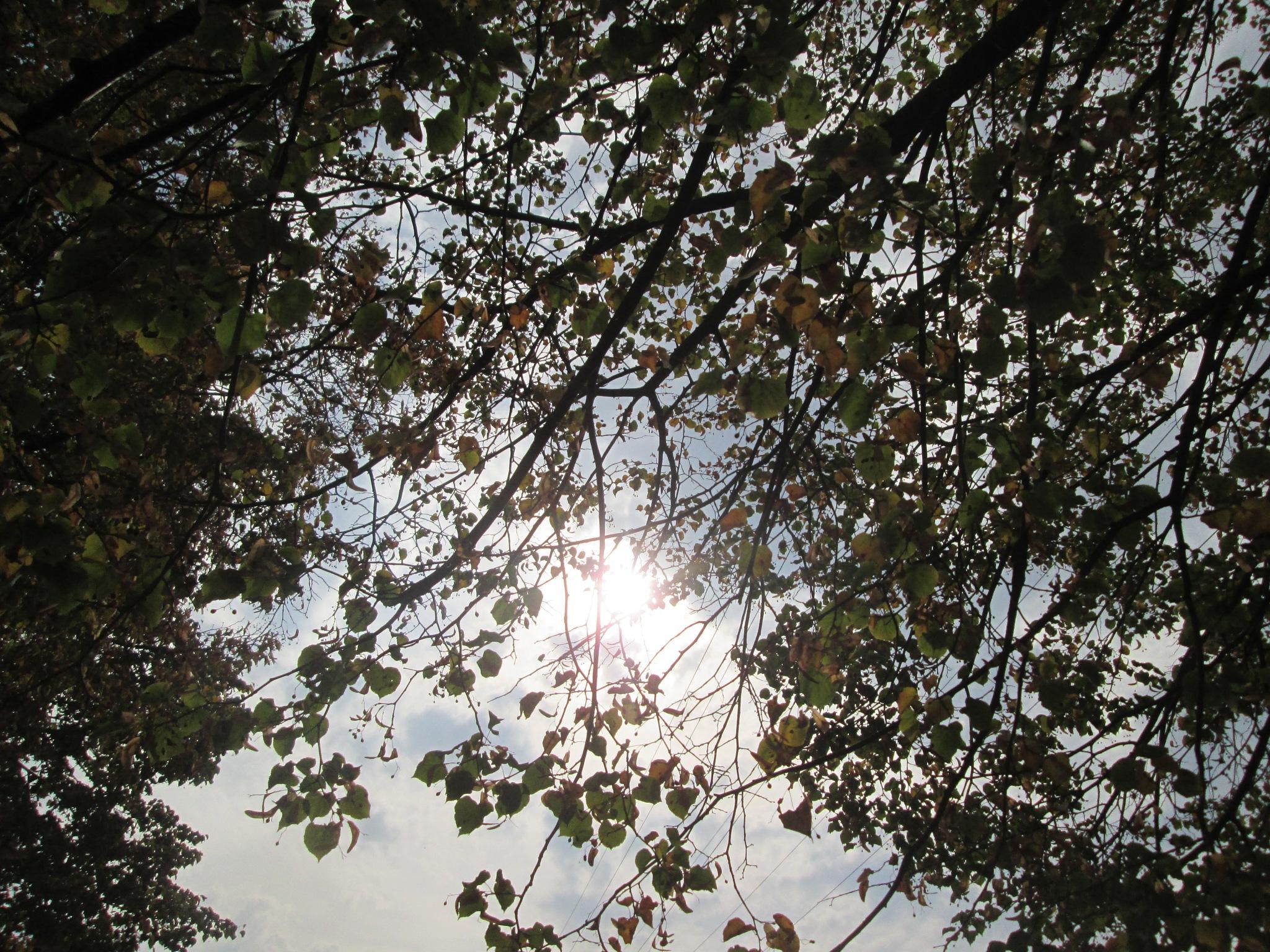 Jesenji dan by Lovorka Sadout
