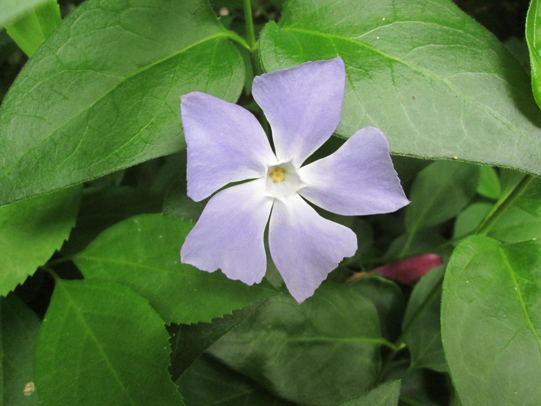 Cvijet by Lovorka Sadout