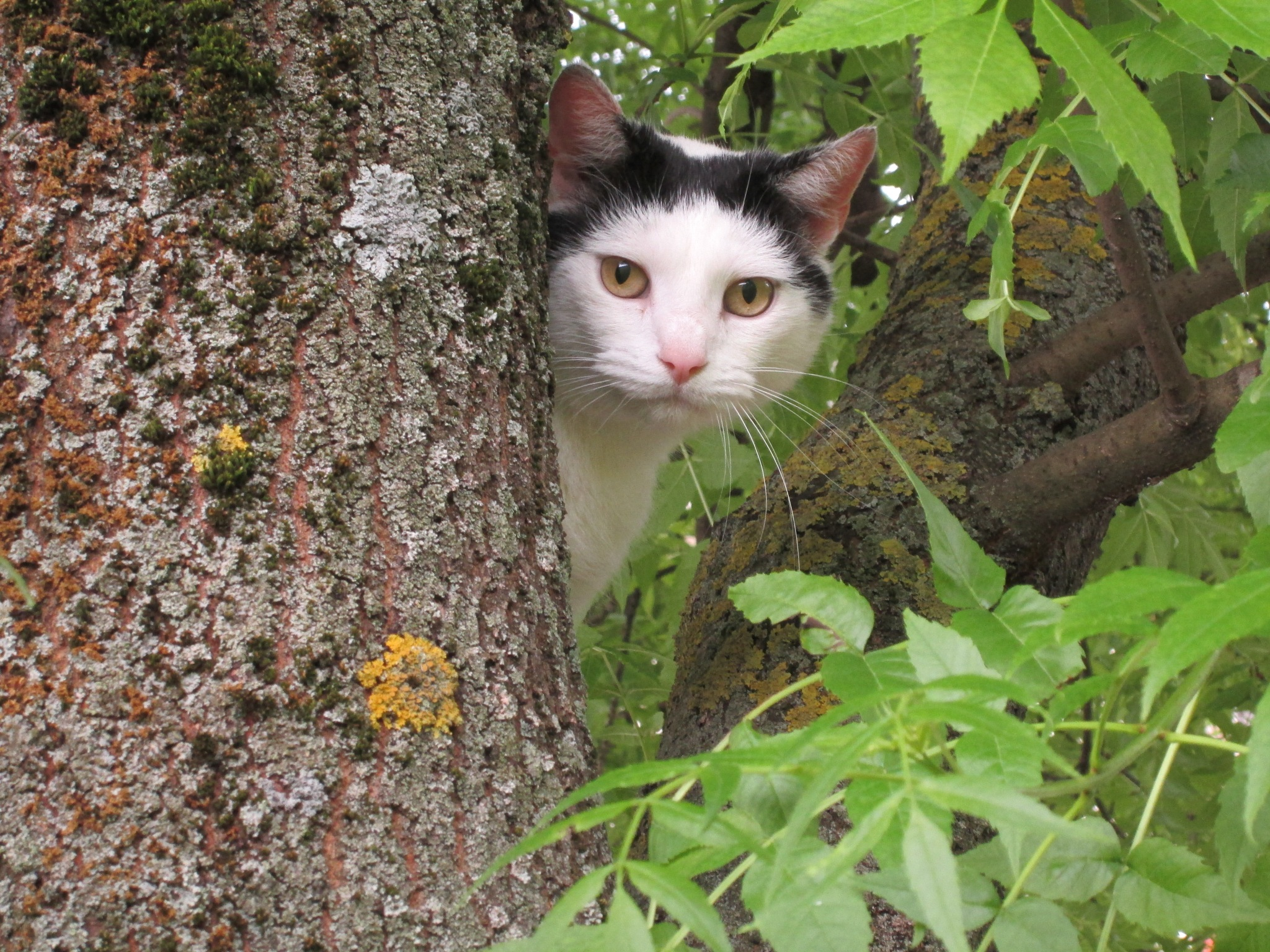 Mačka by Lovorka Sadout
