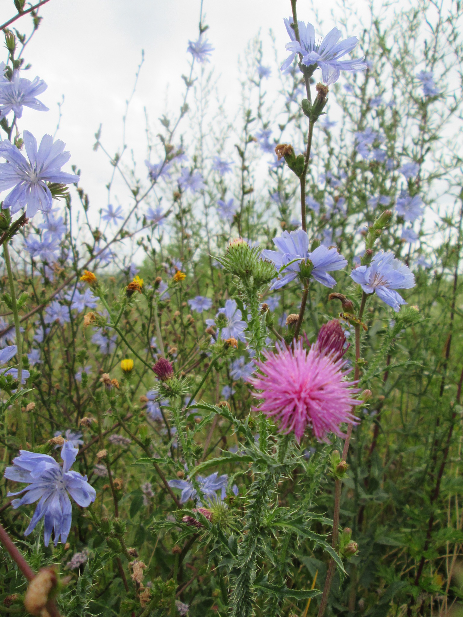 Divlje cvijeće by Lovorka Sadout