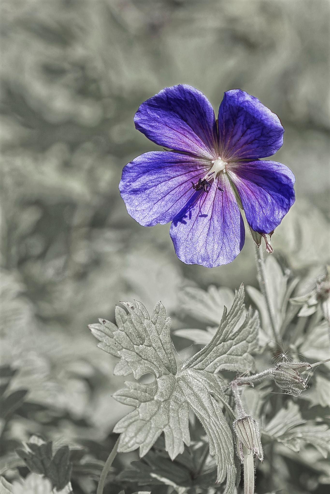 Violet Flower by Stephen Drew