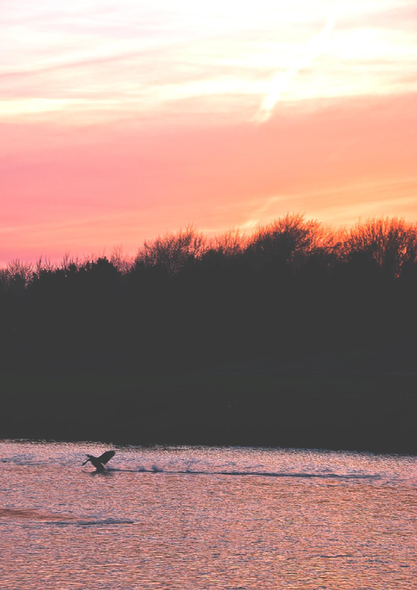 landing at sunset by Dawid Sadowski