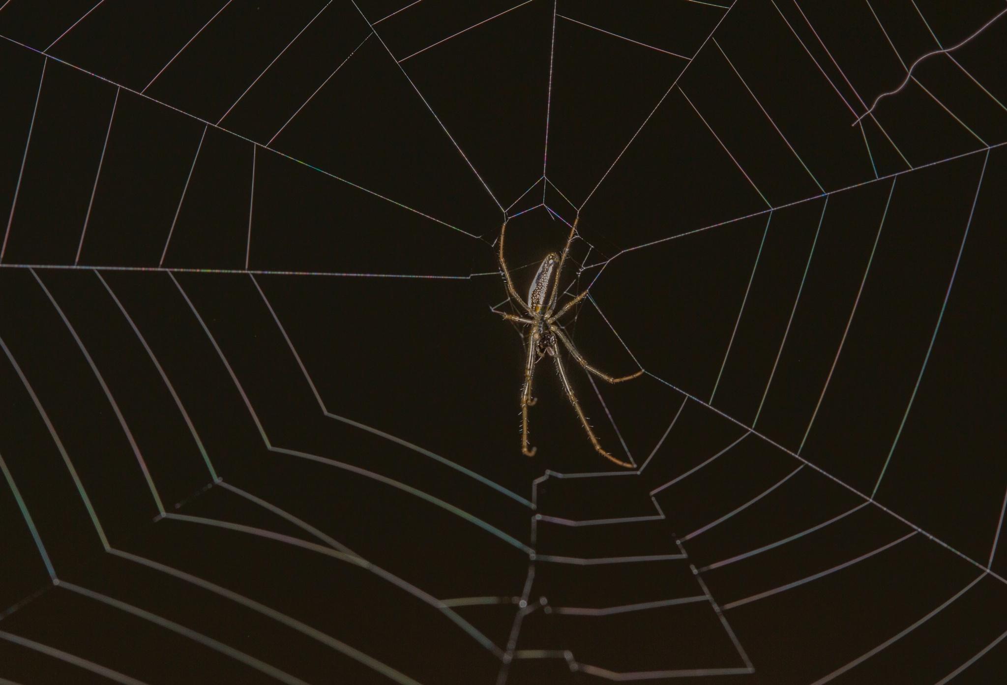 Spider by Philip Cooper
